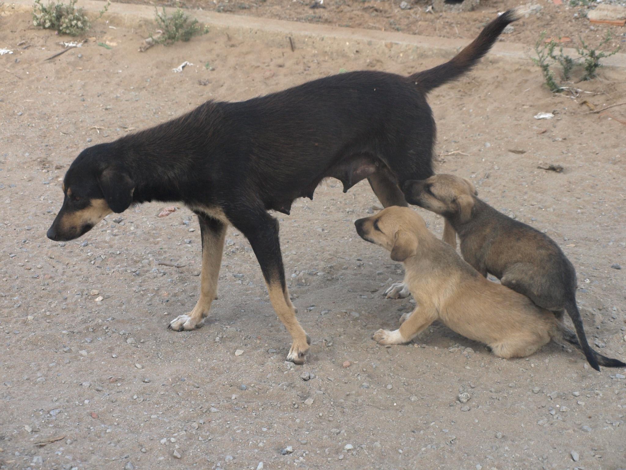 Dogs by Abdelghafour Ktiyeb