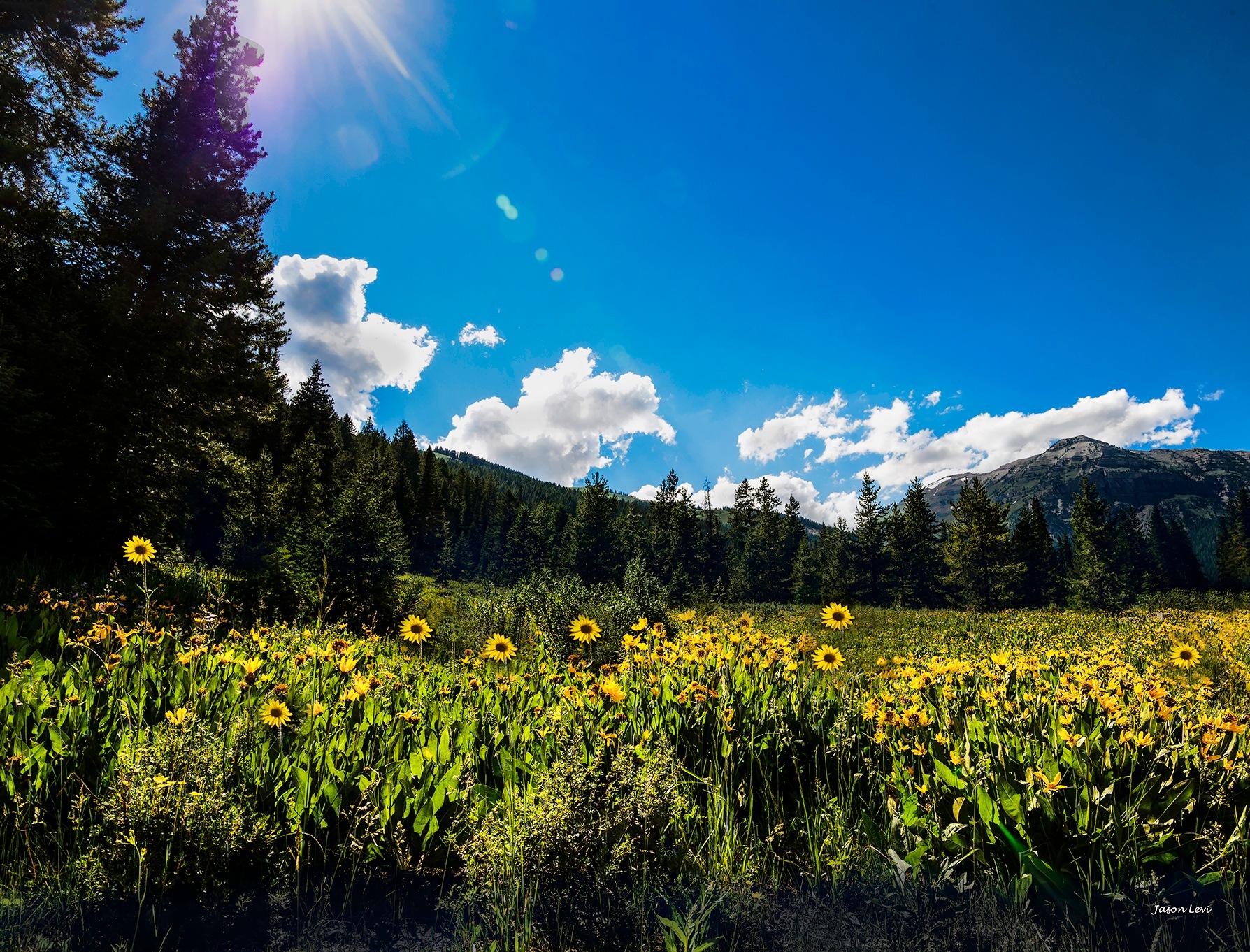 The Field by Jason Levi