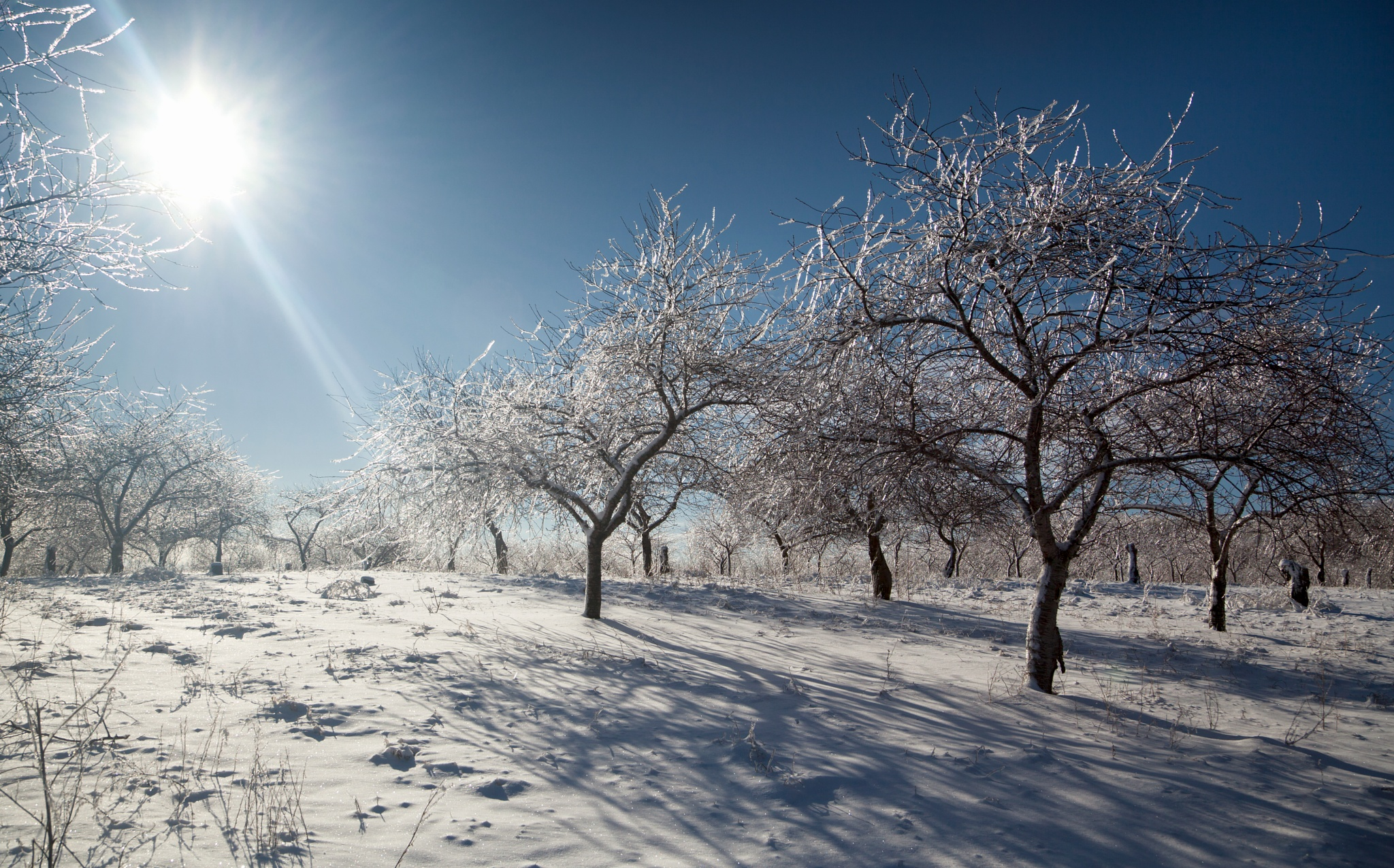 Sun Over an Icy Orchard by Kevin Kludy