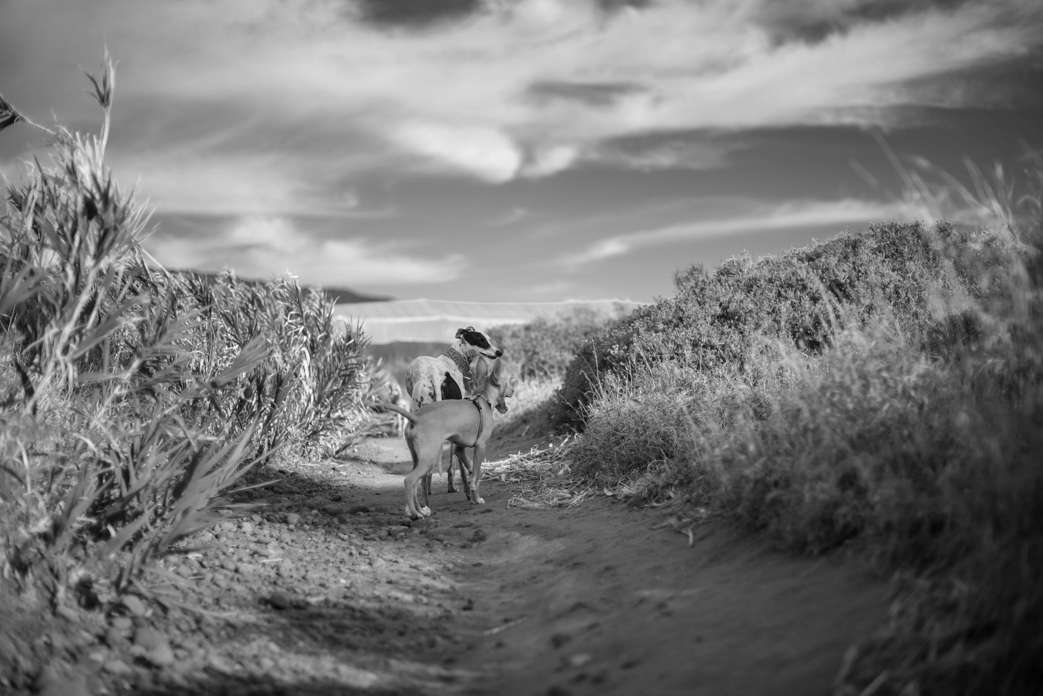 Photo in Animal #can #perro #españa #canarias #playa #paisaje #animales #pet #blanco y negro #cielo #mascotas