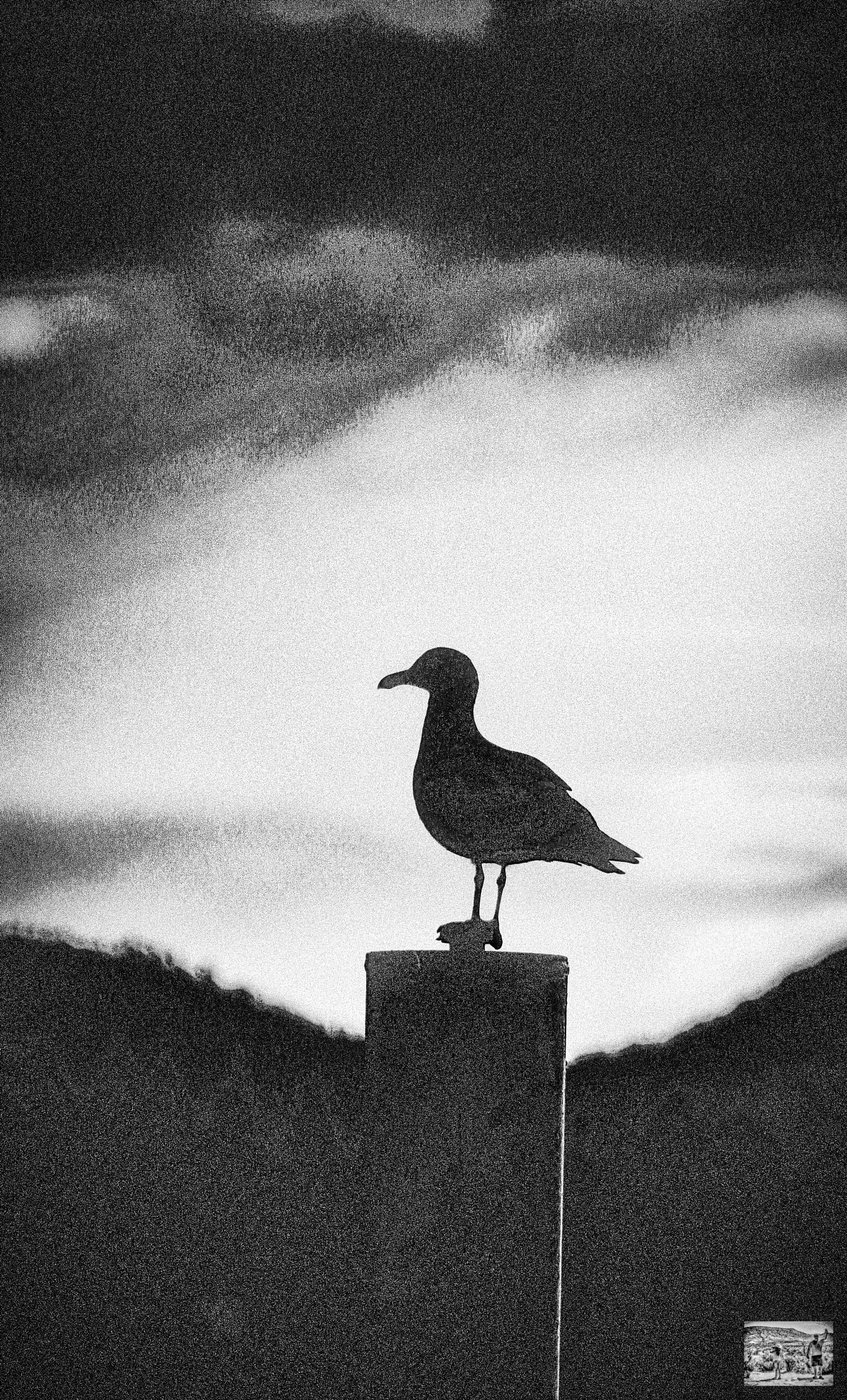 Sea Gull in Black and White by Christopher S Johnson
