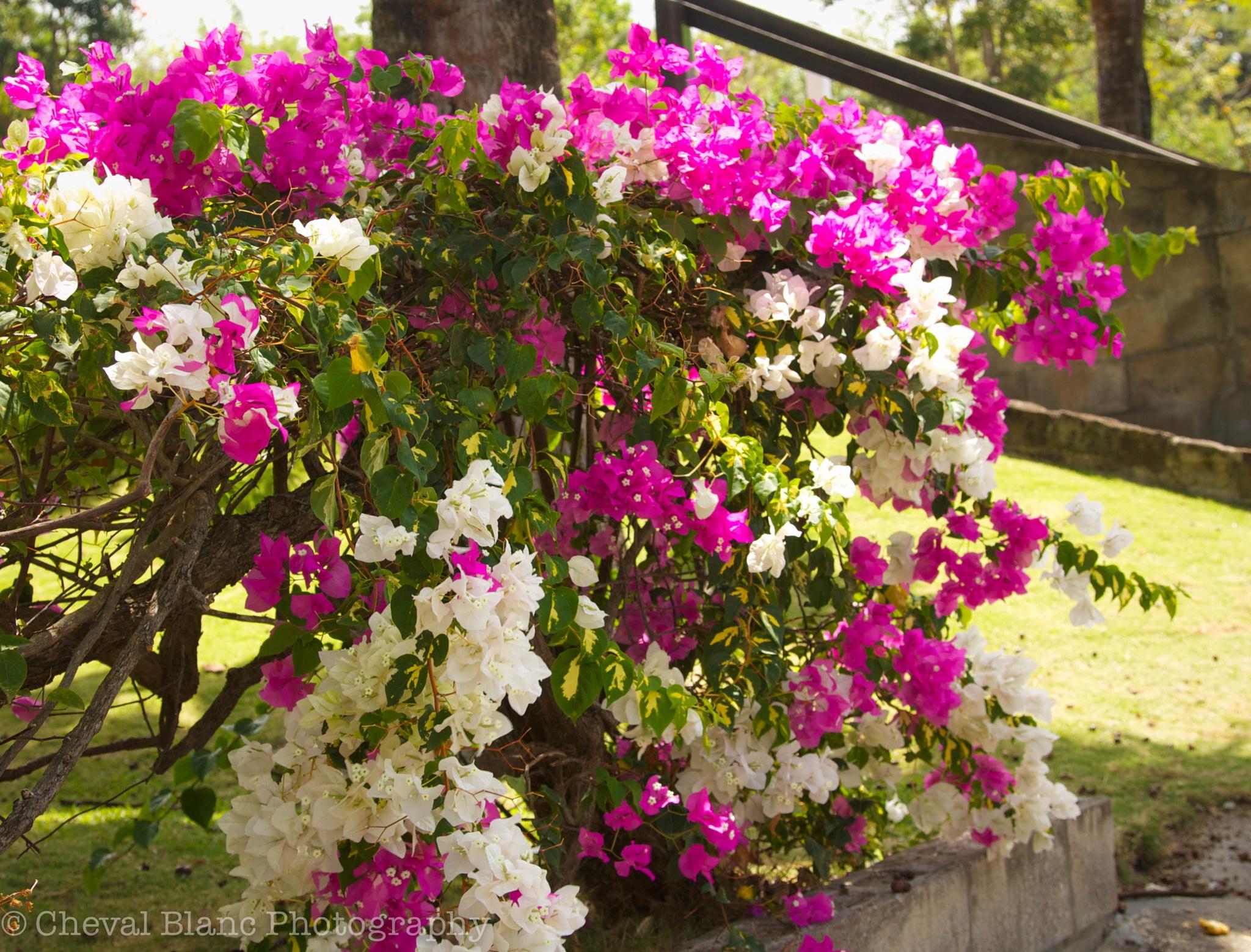 Island flowers by Scott Doner