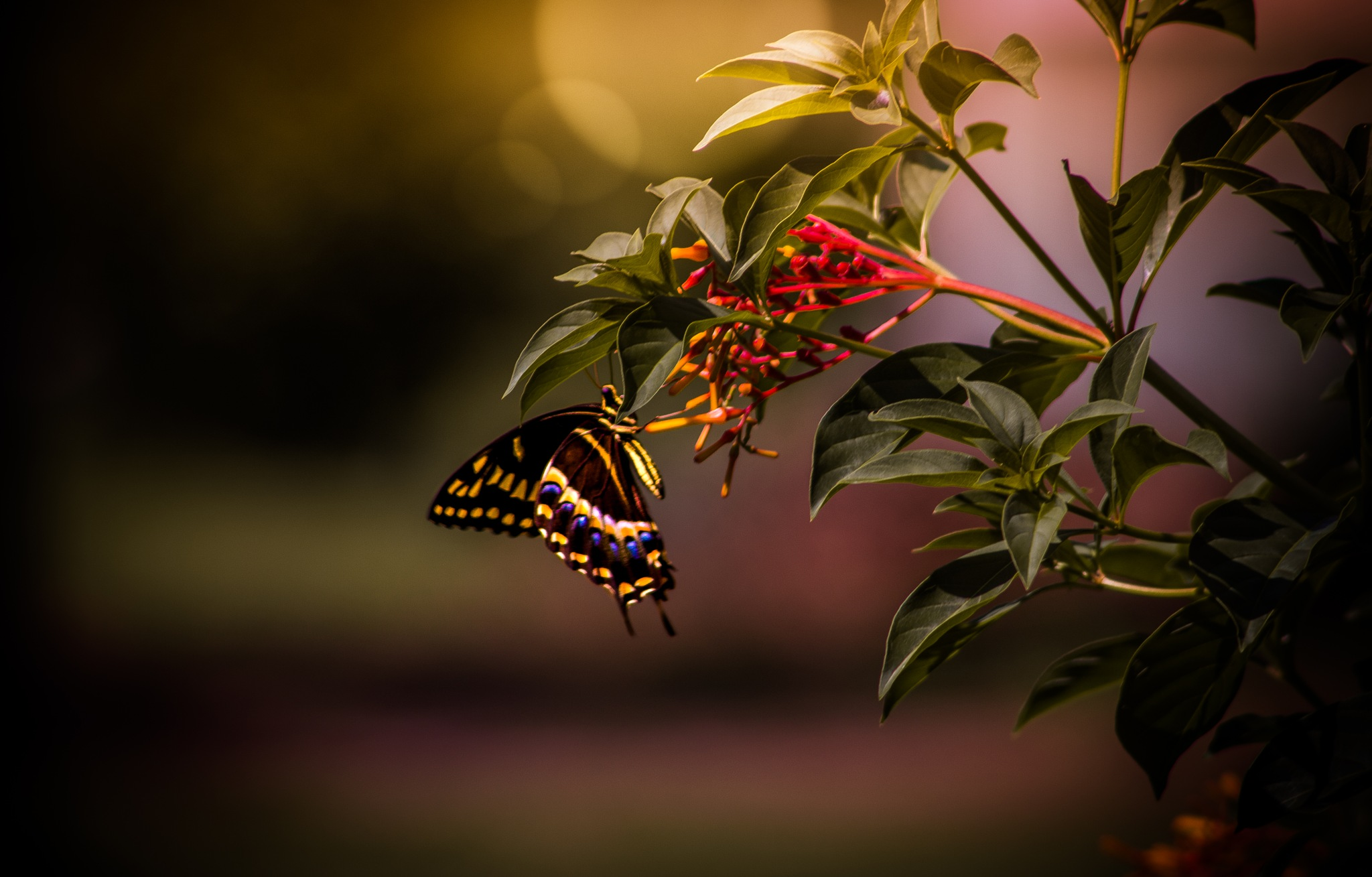 Butterfly garden by Holly Groves
