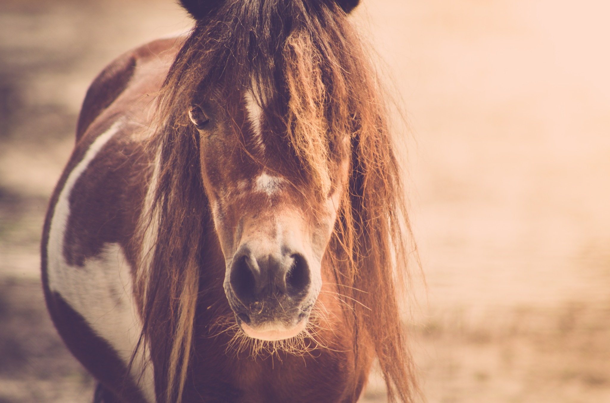 A pony of course by Holly Groves