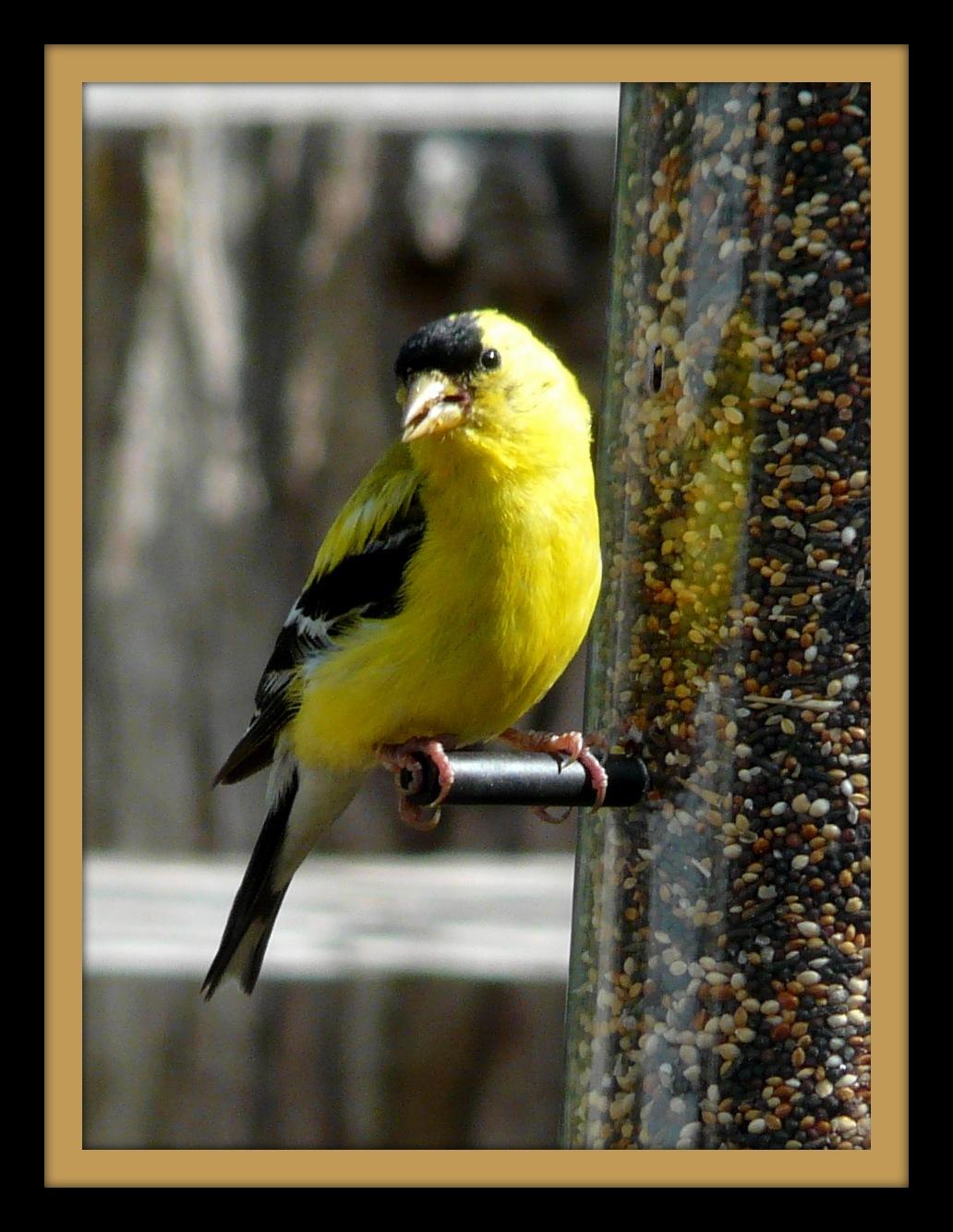 Tweety Bird #2 by marlene burt