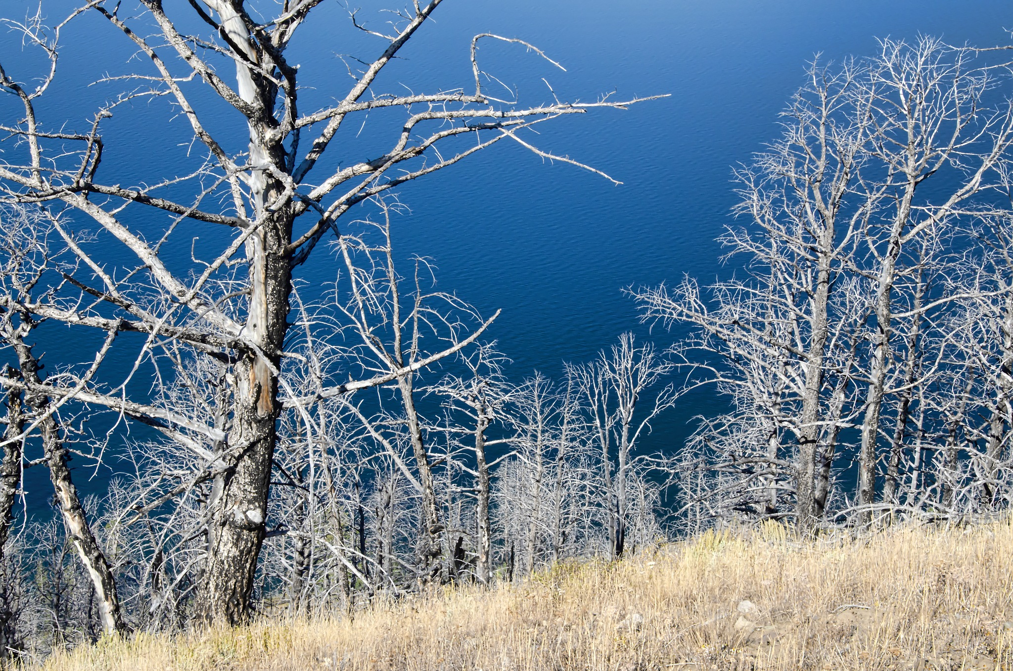Beauty of the standing dead by AlexLupu