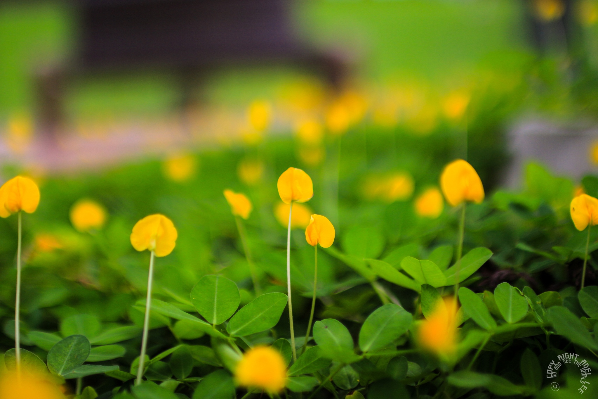 the vividness of yellow. by Adel Lee