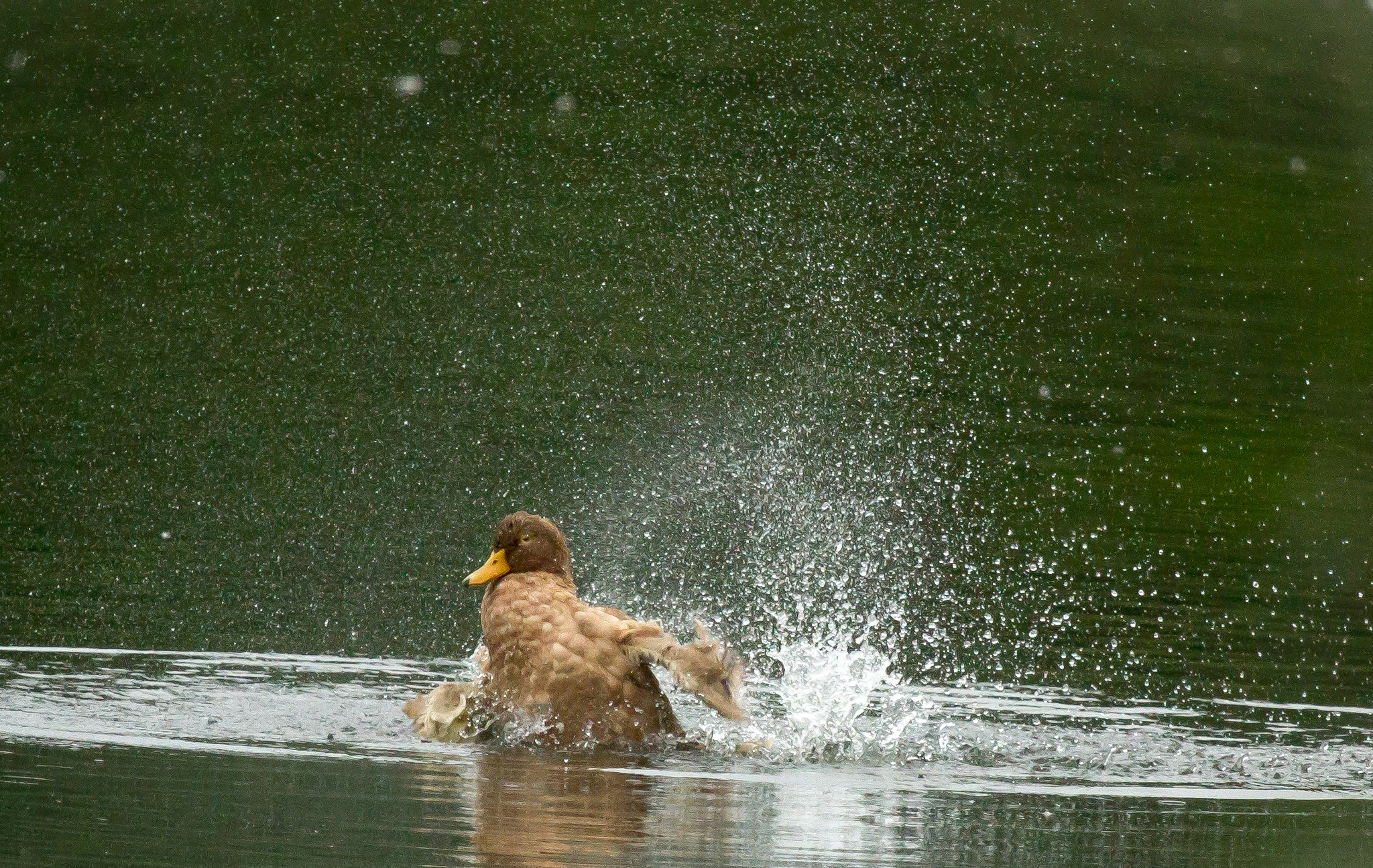 Taking a shower by Andrew Walpole