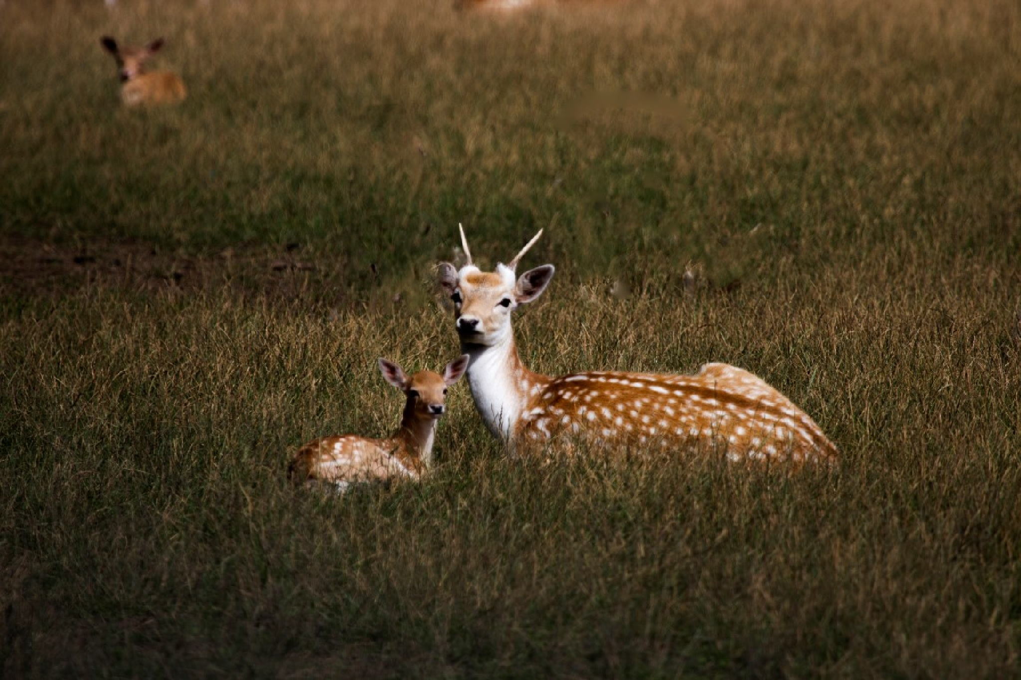 Deer by Andrew Walpole