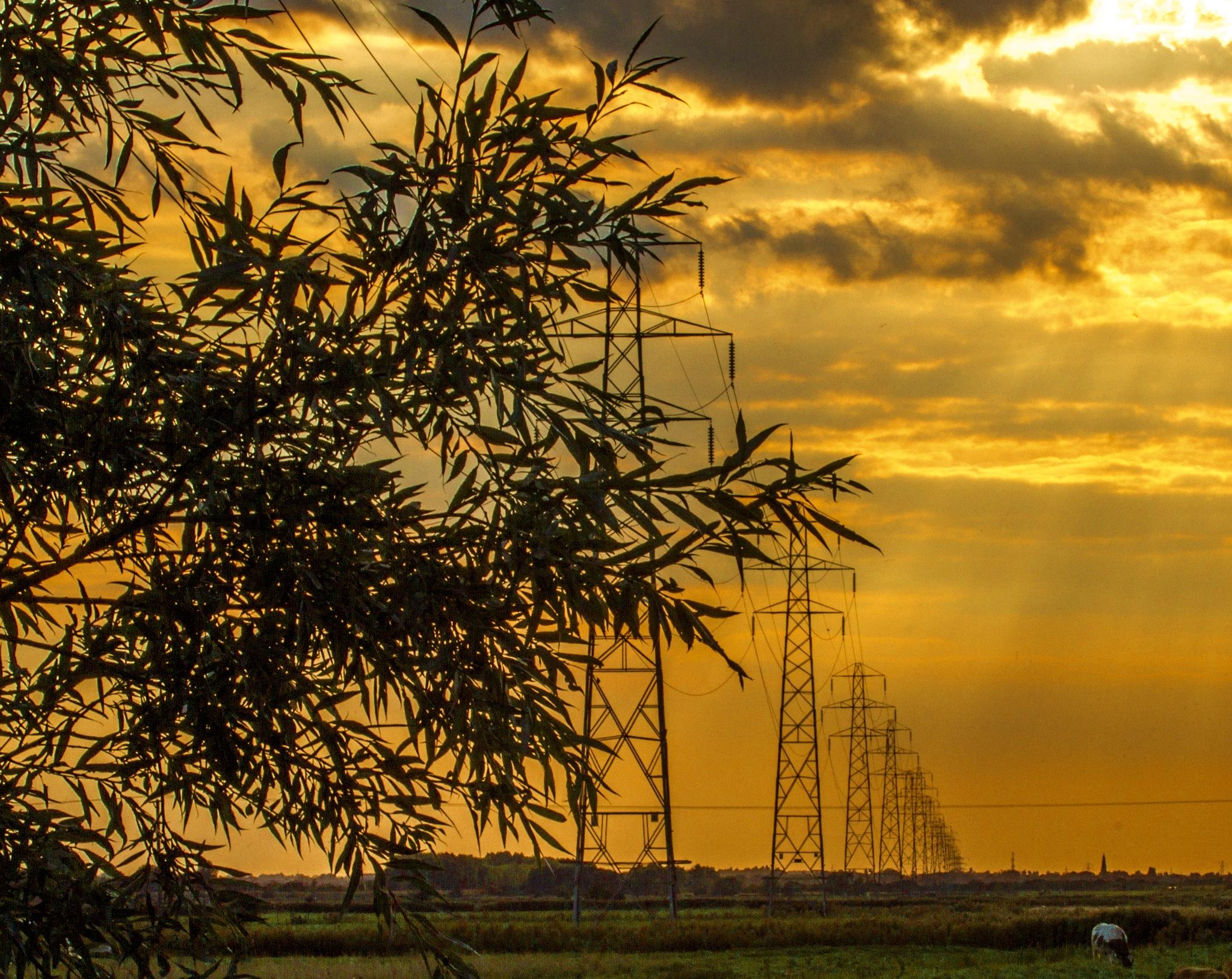 Power line by Andrew Walpole