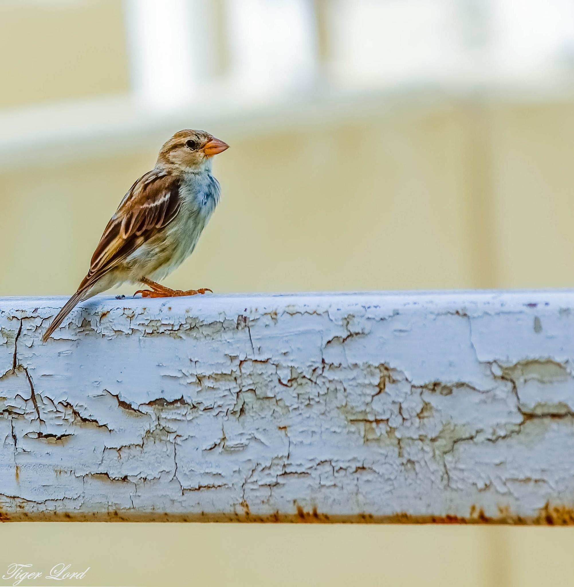 bird by Ahmed L kadiki