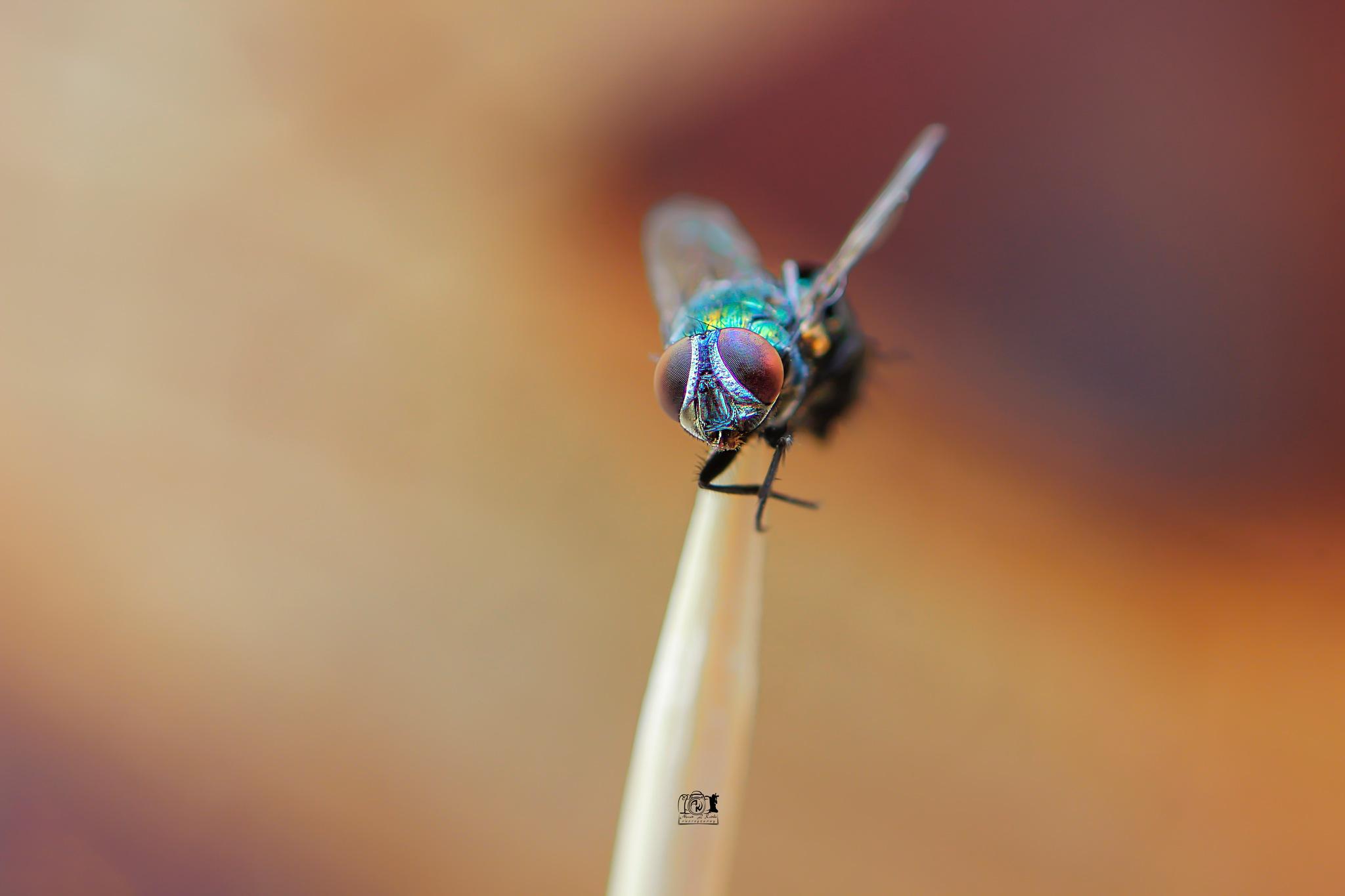 fly  by Ahmed L kadiki أحمد الكاديكي