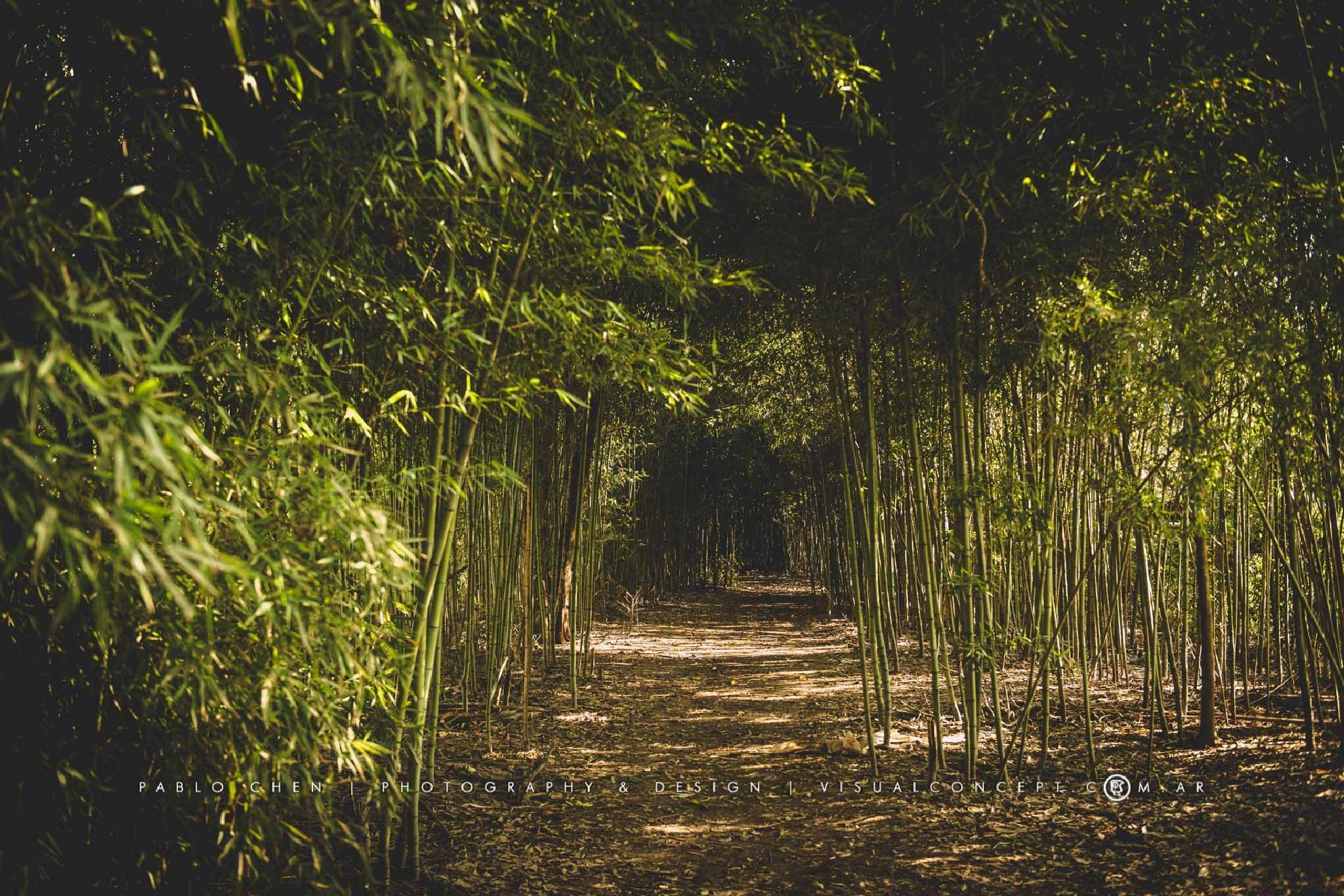 Delta Terra Natural Reserve by Pablo Chen