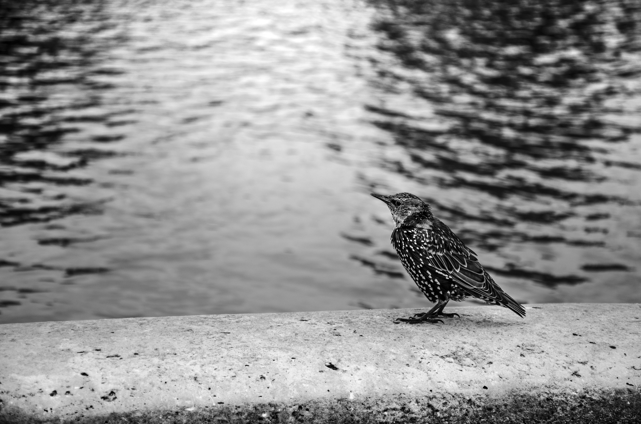 Bird by Carlo Cirillo