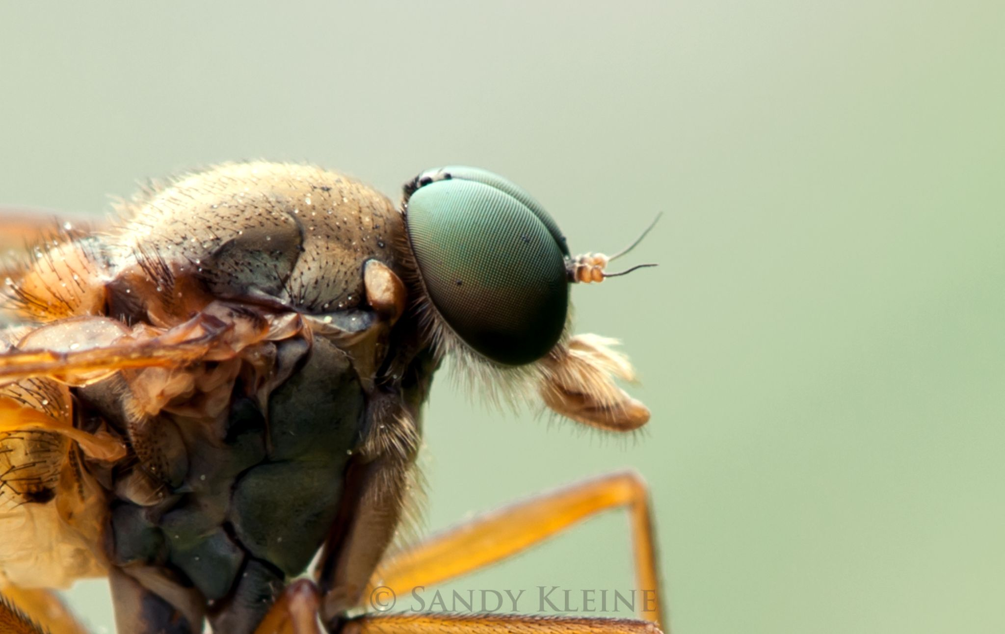 fly by Sandy Kleine