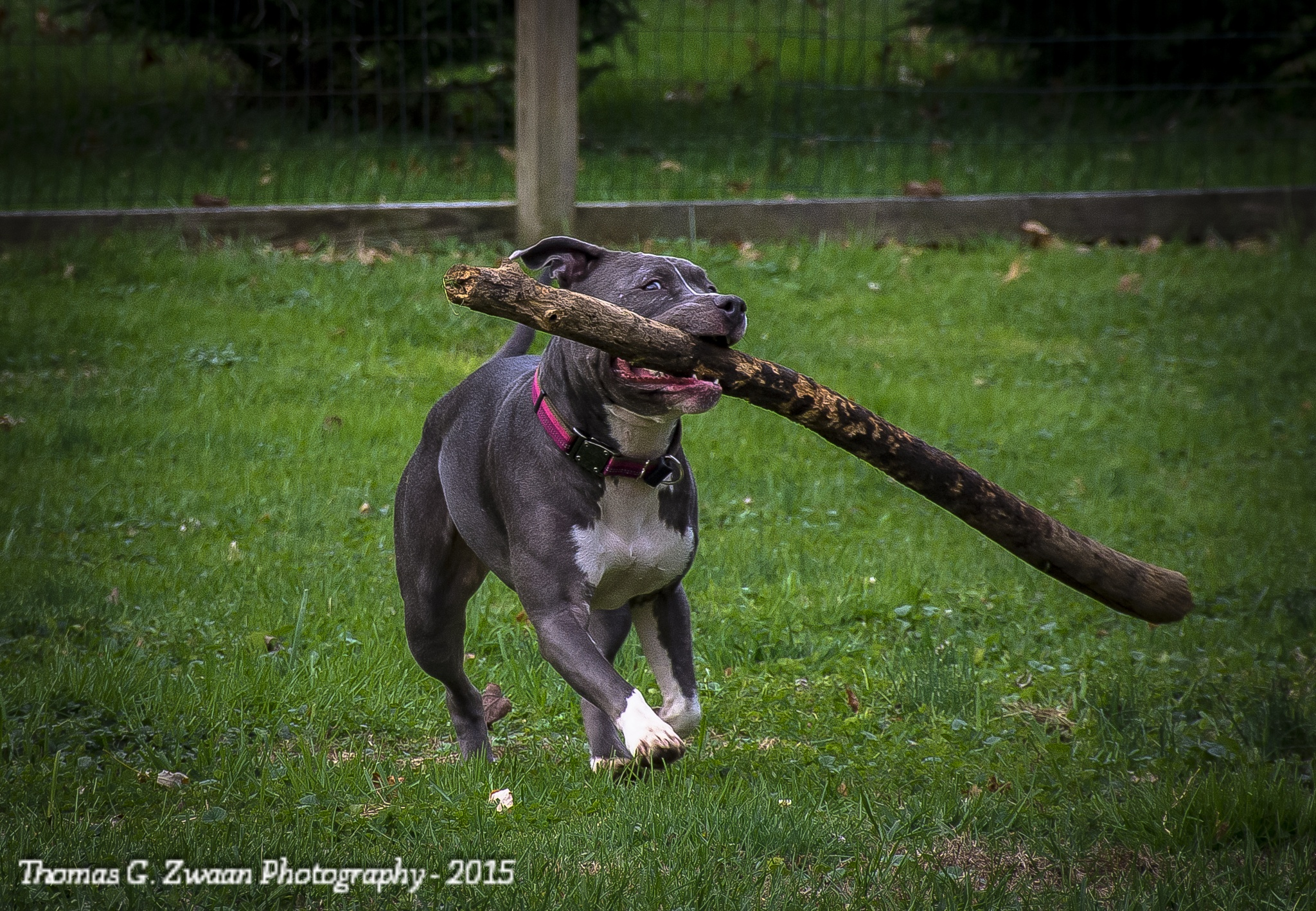 Playing Stick by thomasgzwaanPhotography