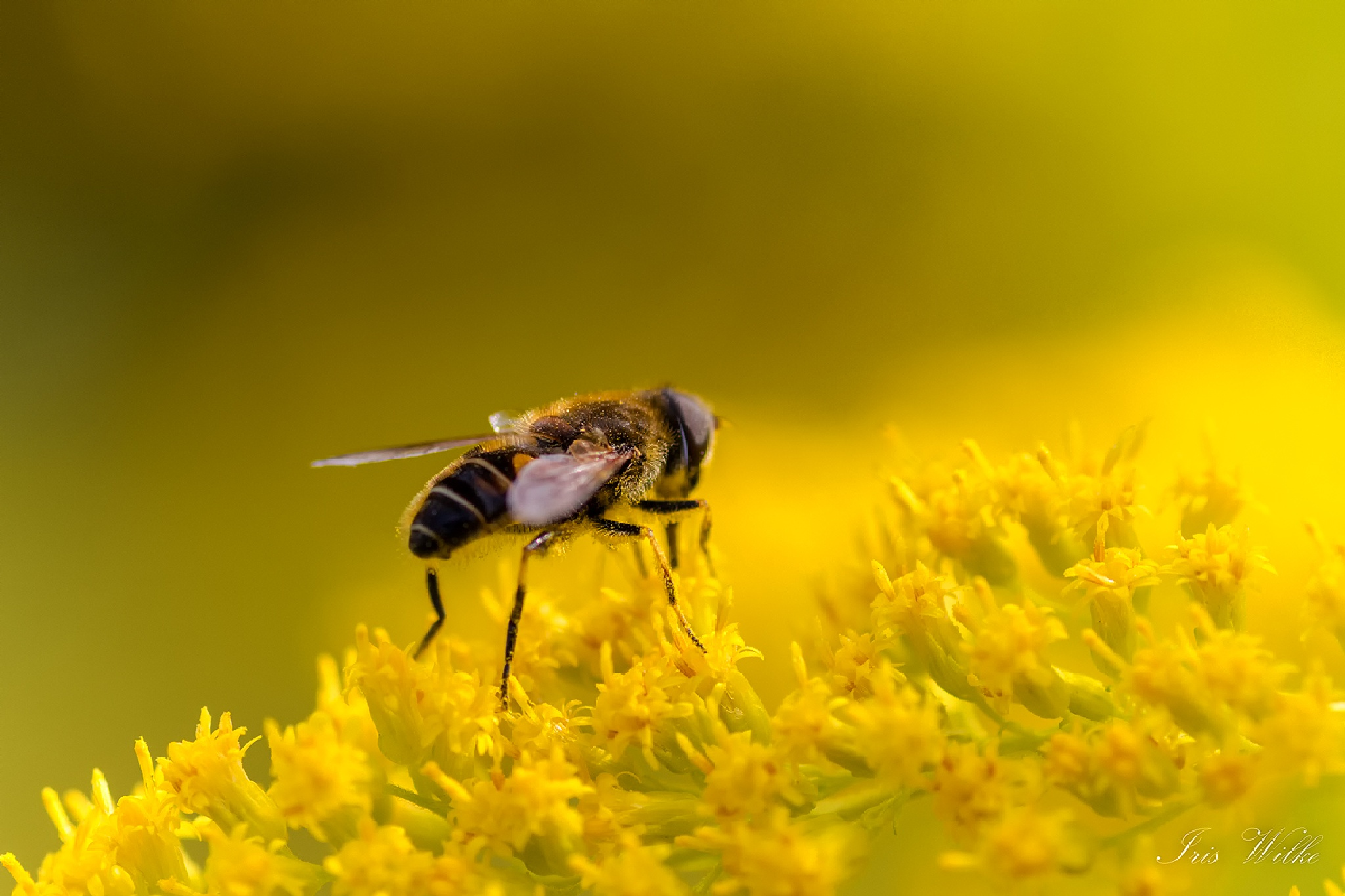 Dream of the Fly by systera
