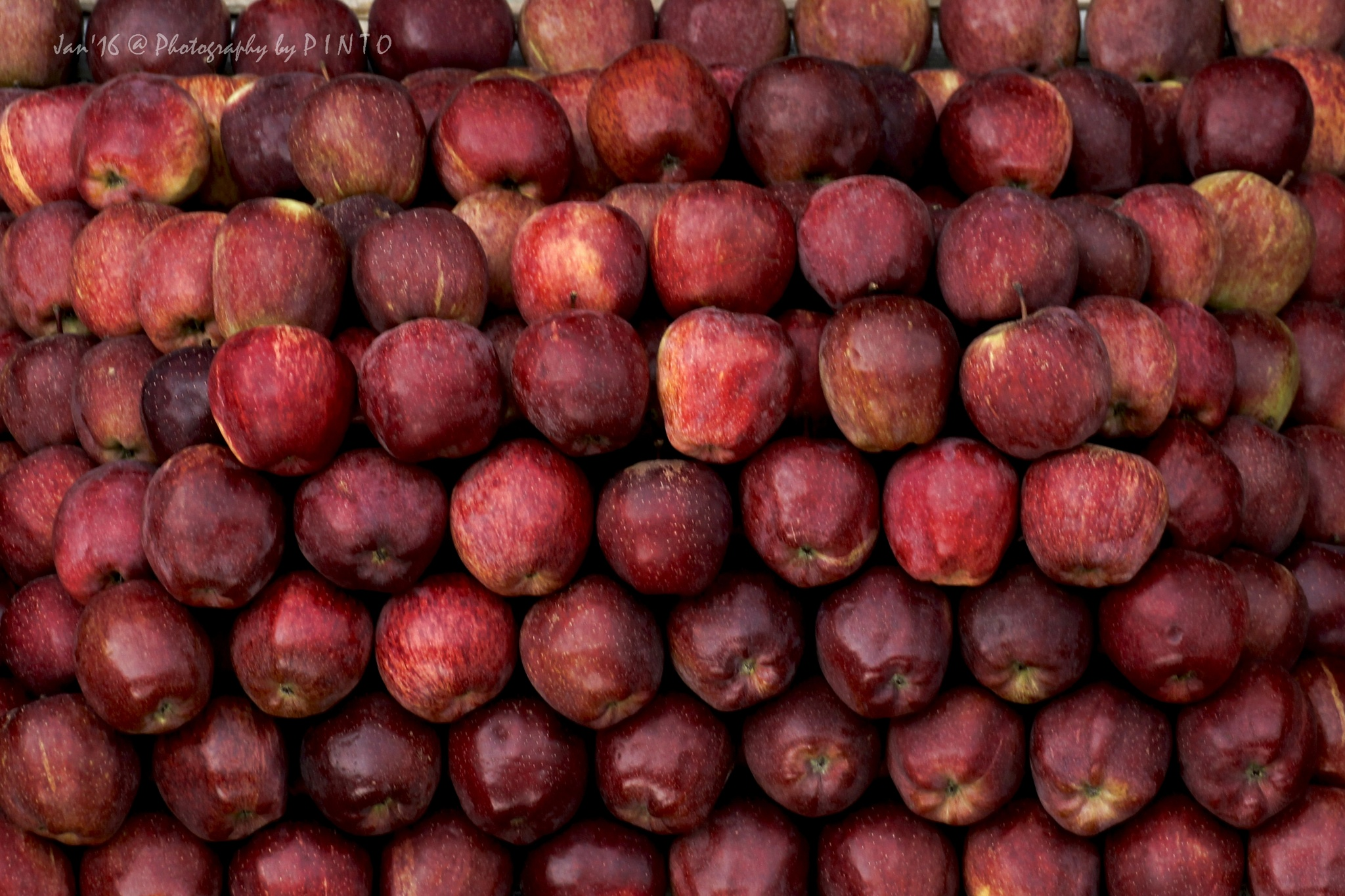 Start your day with an apples...take it easy!! by Arunesh Singh
