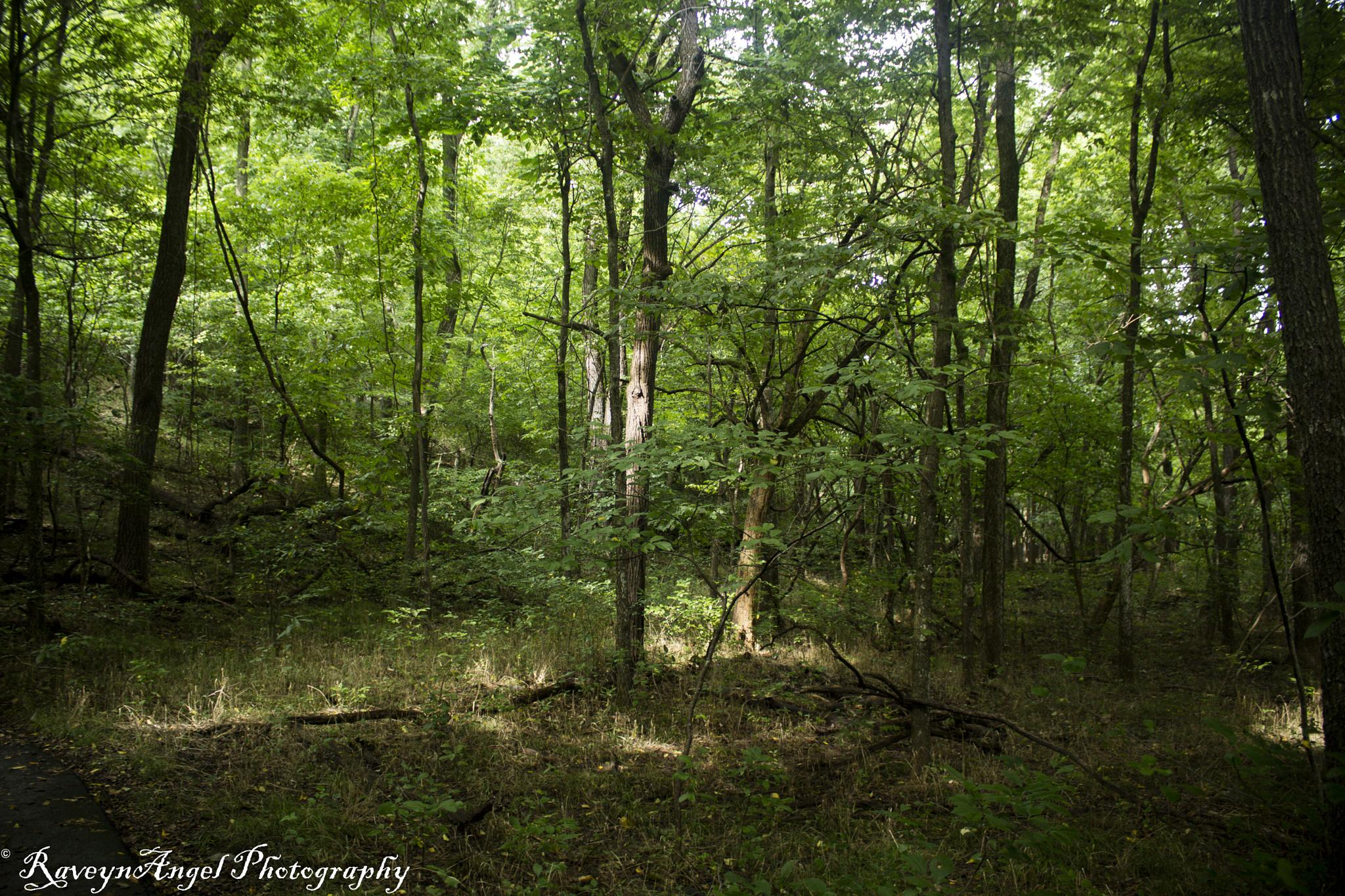 The Nature Center, Springfield, MO by RaveynAngel