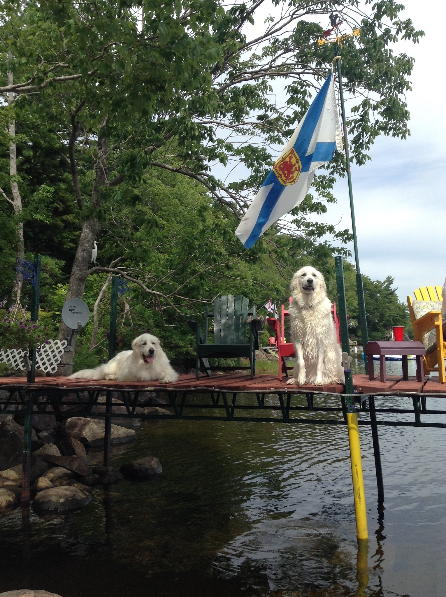 Dogs at the cottage by Shutterbug006