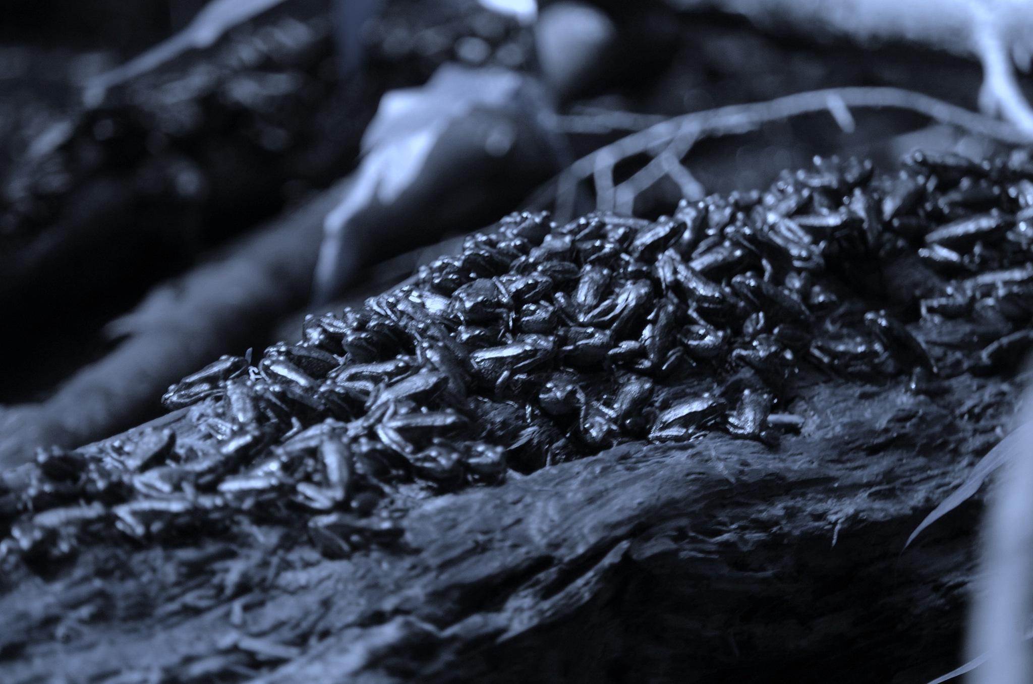 frog pile... by Paul Tetloff