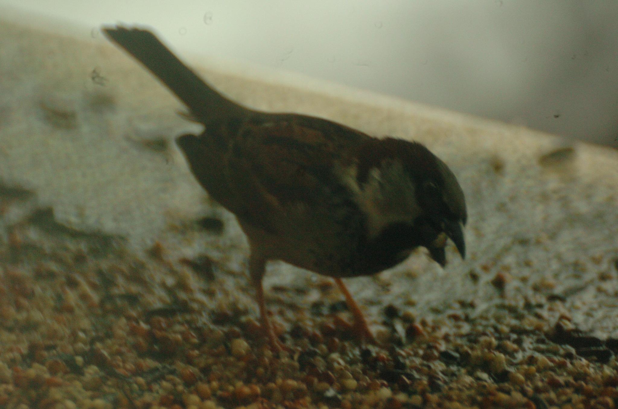 bird by Paul Tetloff