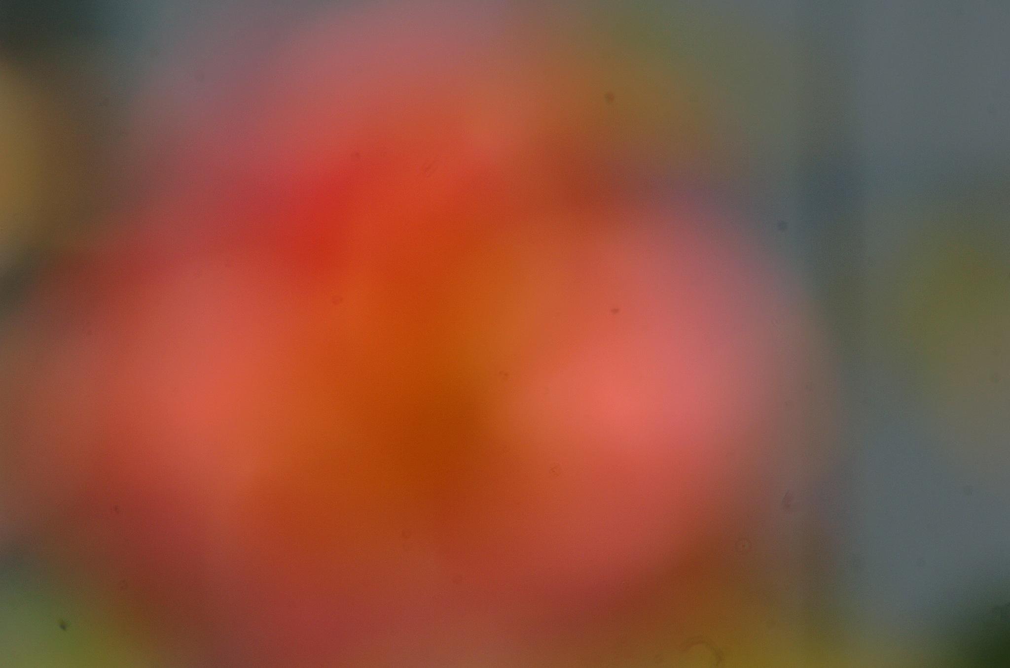 abstract  by Paul Tetloff