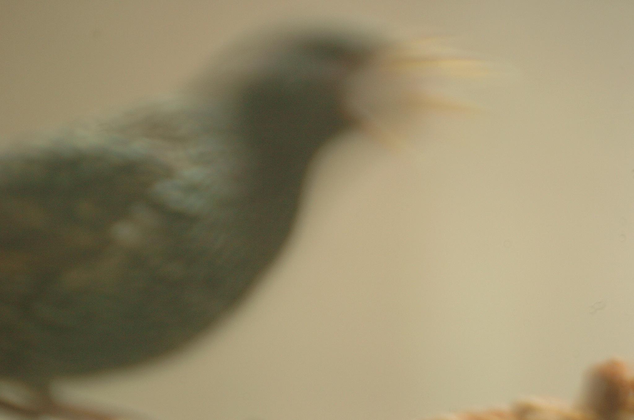 blurred -1 by Paul Tetloff