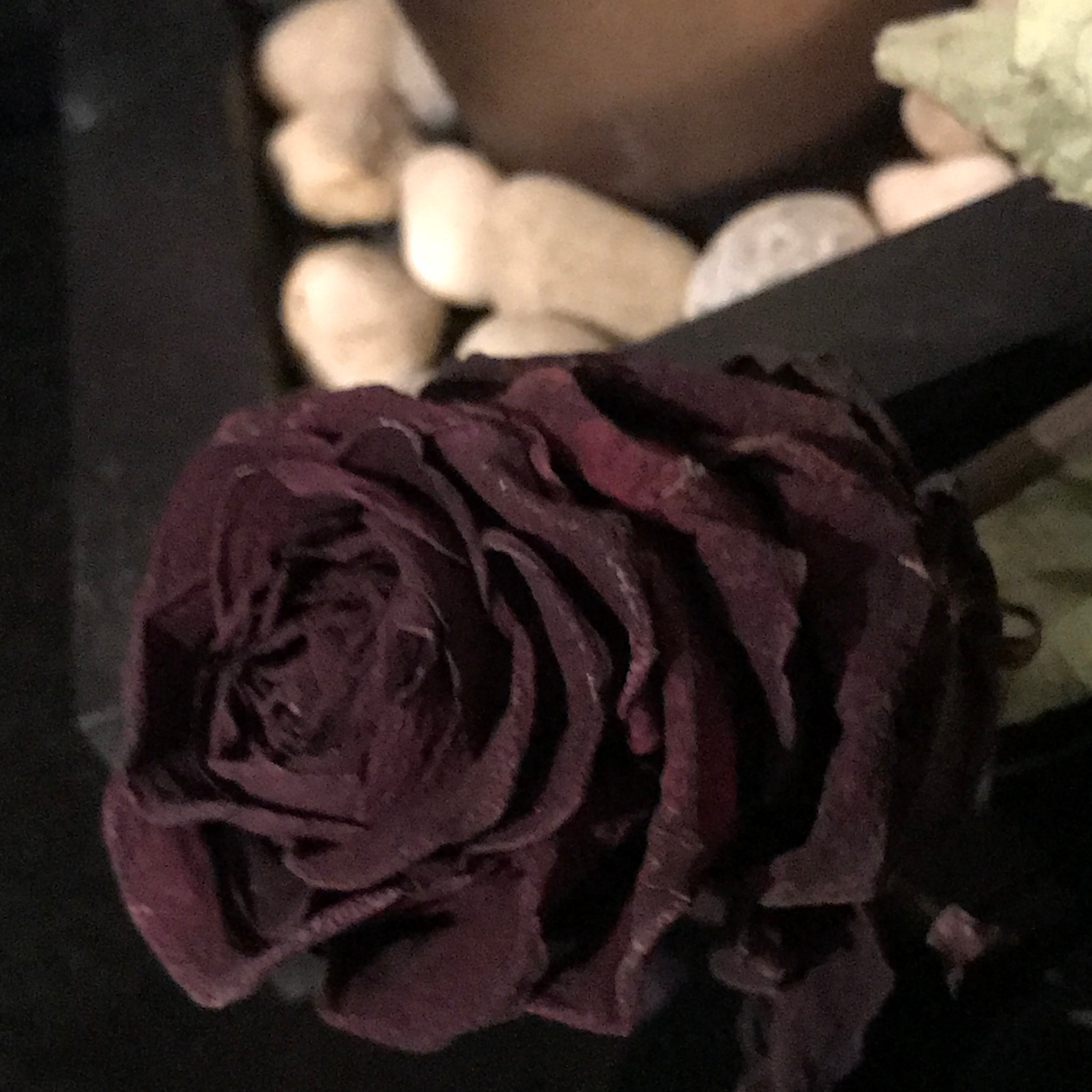 Rose by Michele