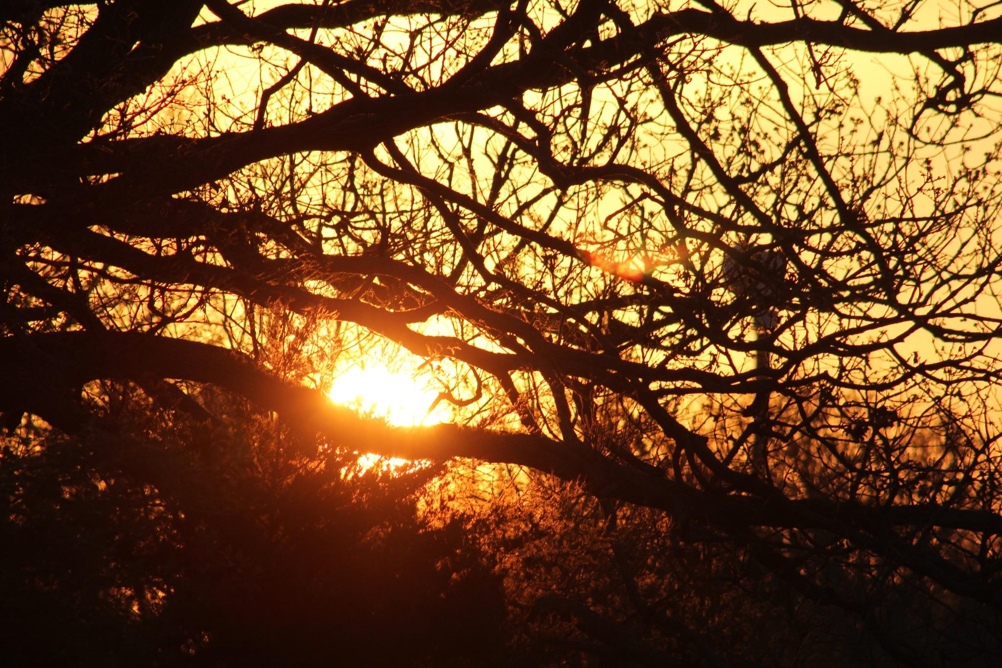 GOOD MORNIN MORNING HELLO SUNSHINE by Tara Smith
