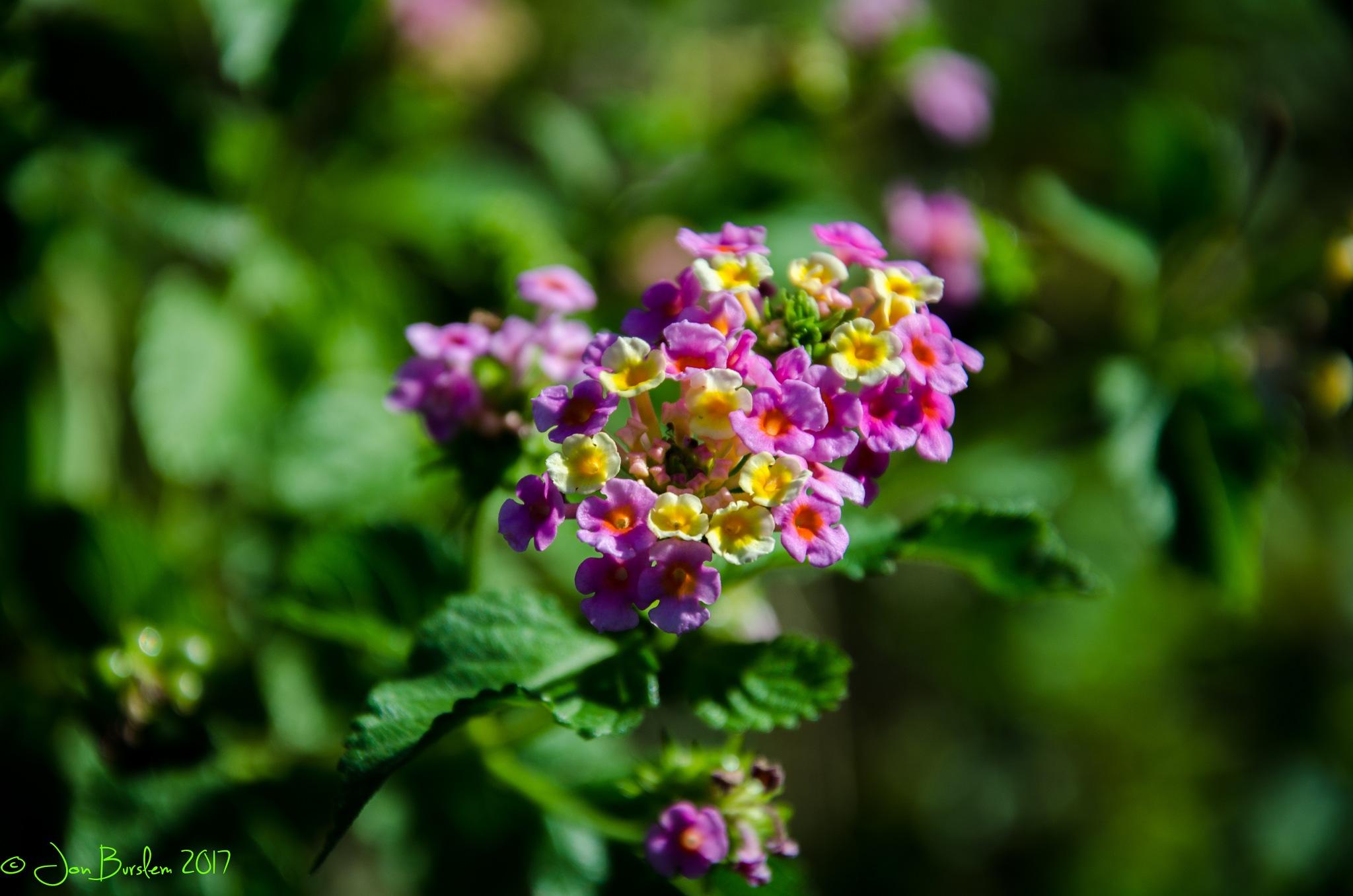 Flower by Jon Burslem