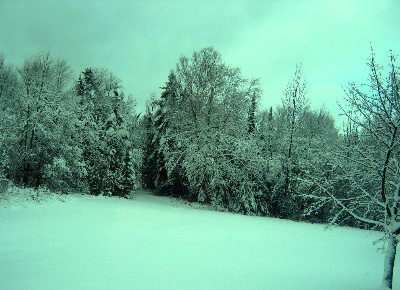 Snow, Snow Go Away by sllennips