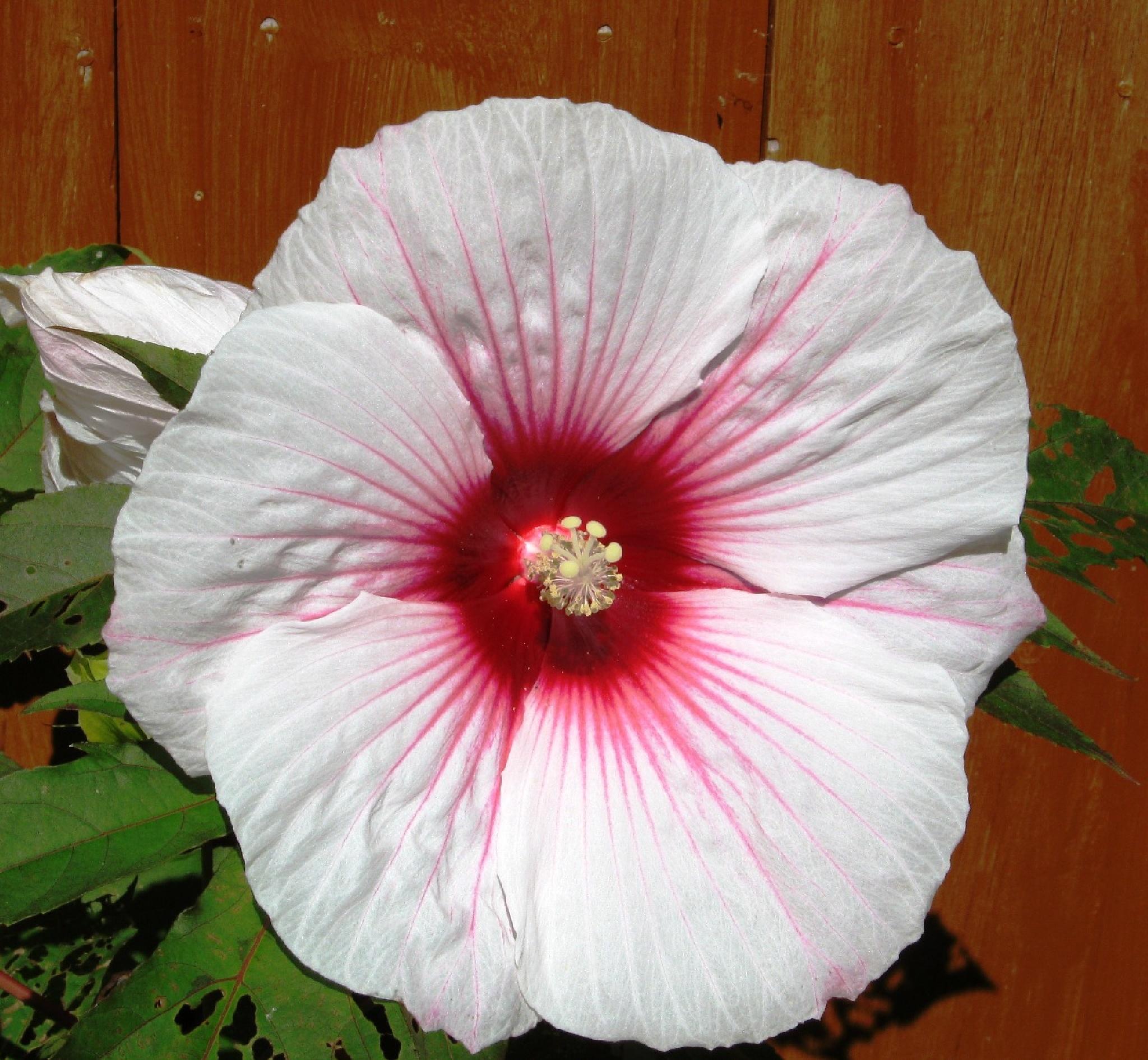 Flower Power by sllennips