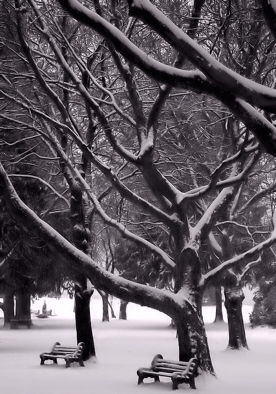 Photo in Black and White #b&w #winter #park #snow