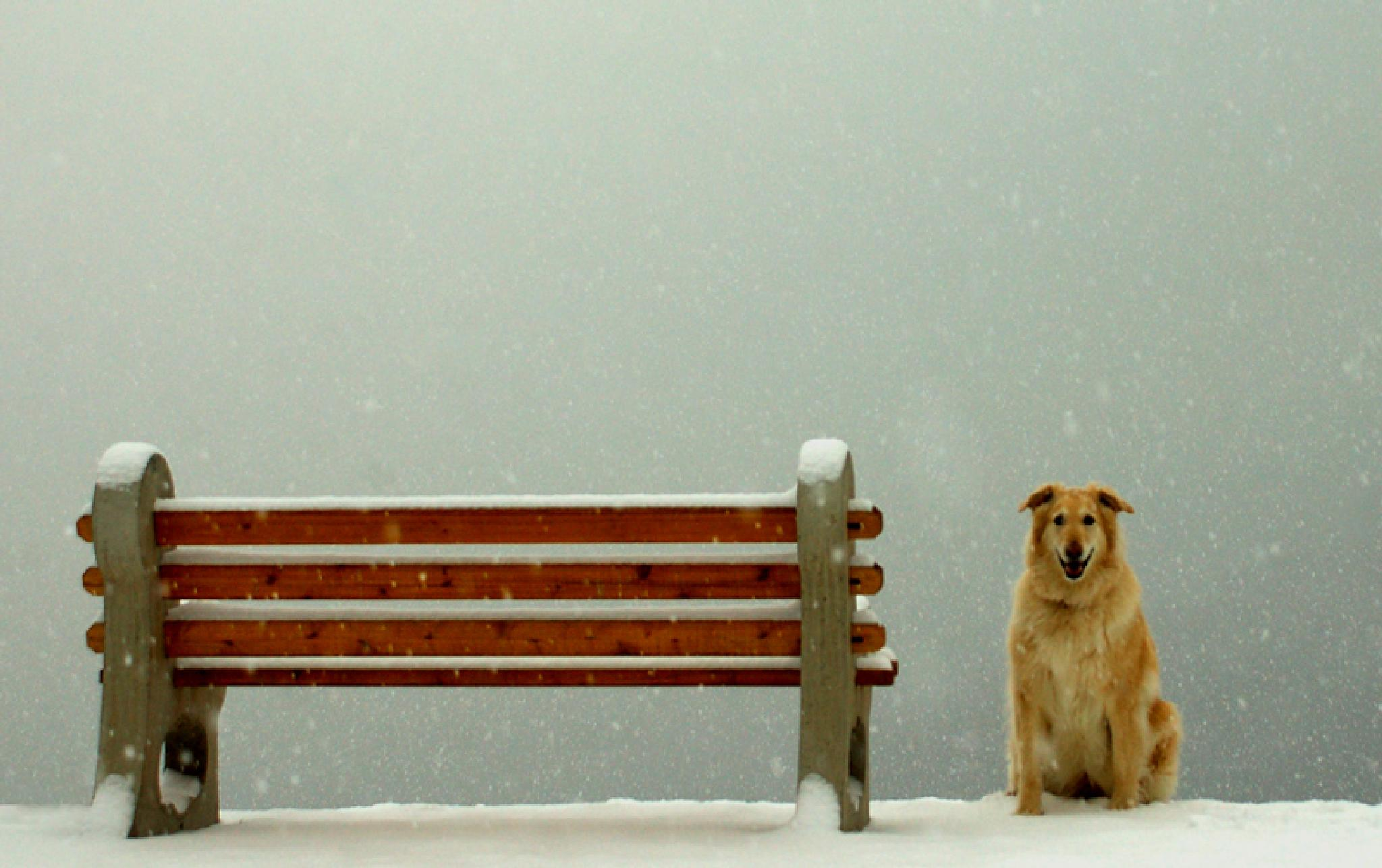 Dog waiting for a friend by MadeleineGuenette