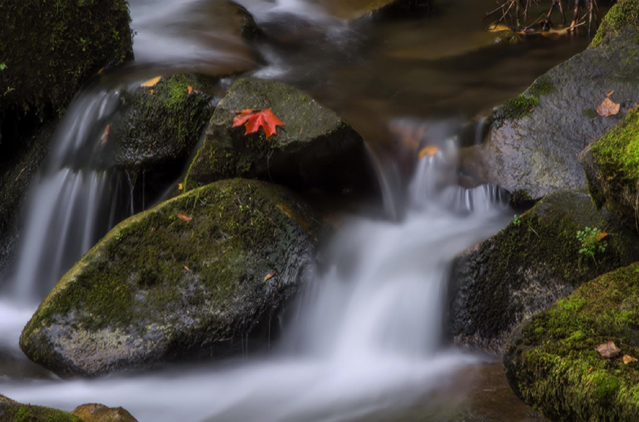 Autumn simplicity by MadeleineGuenette