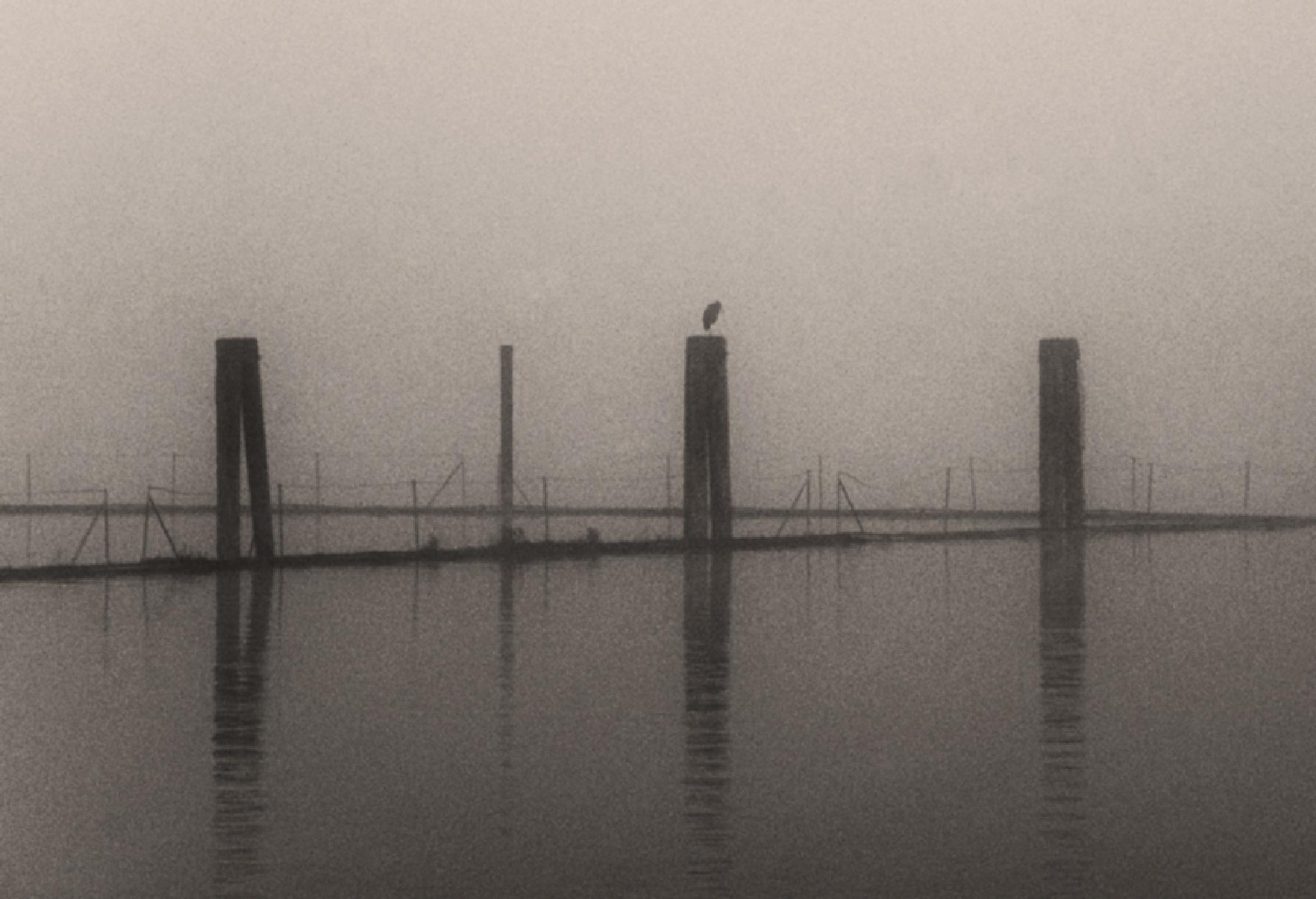 Fog by MadeleineGuenette
