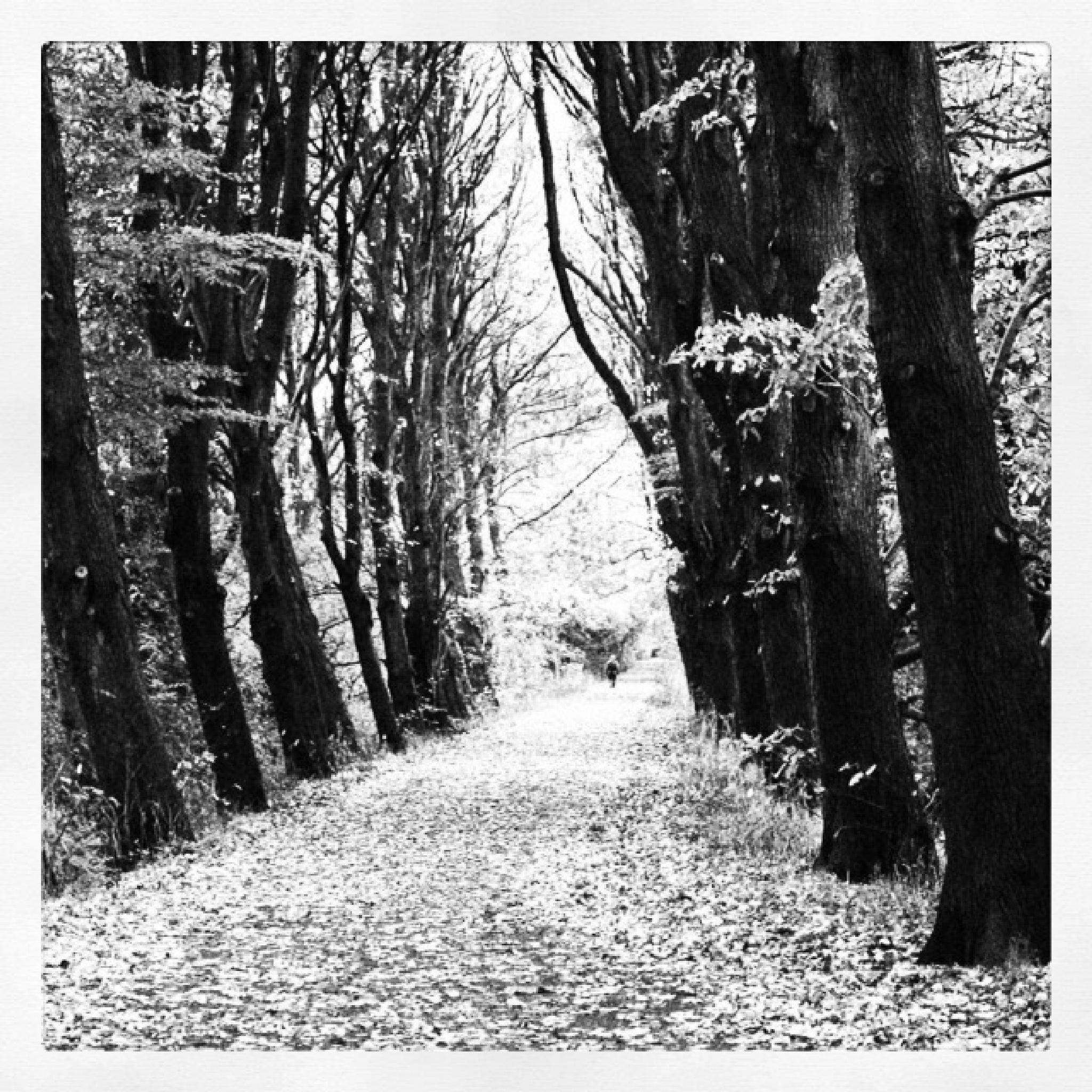 An autumn walk through the avenue of trees by Paul Stobbs