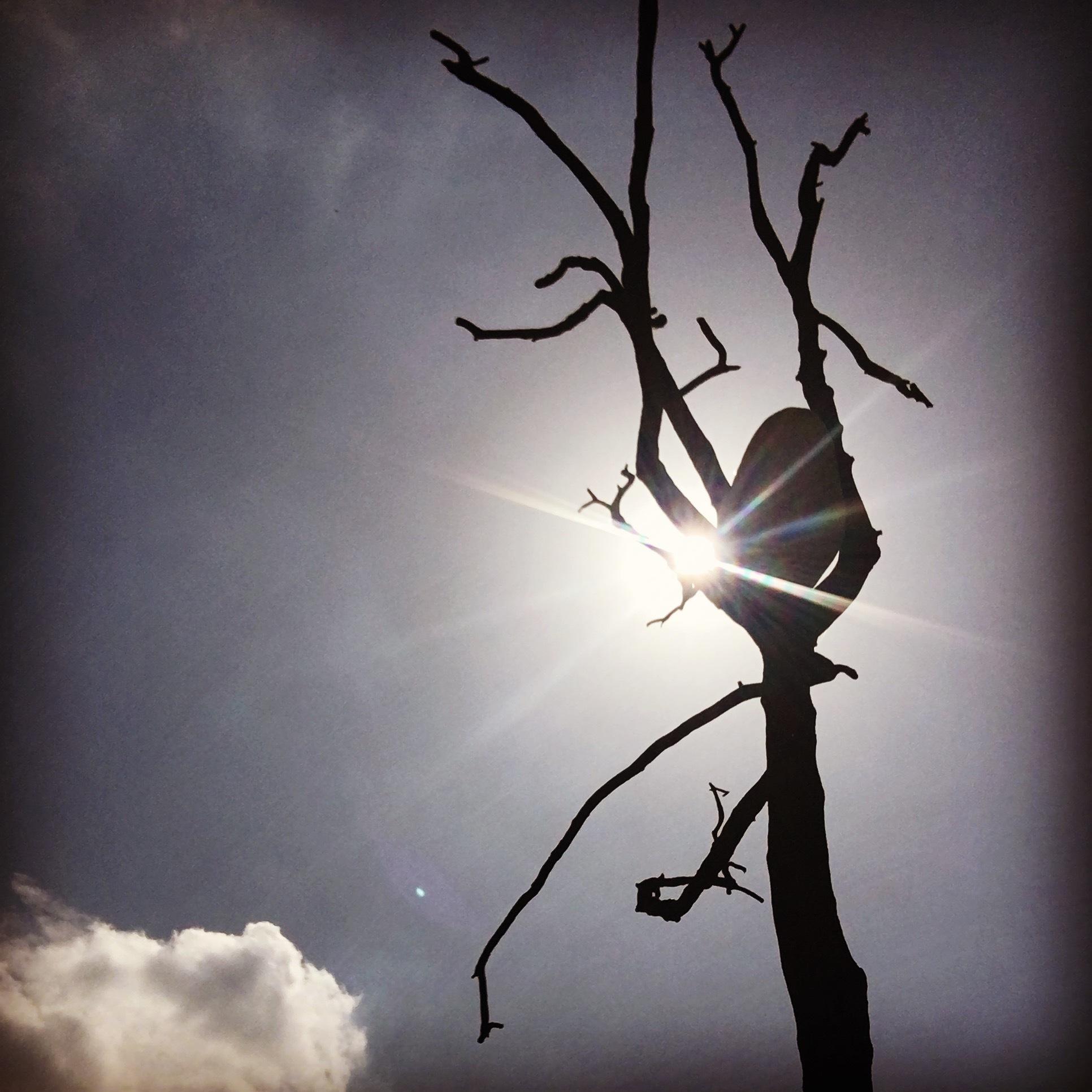 Rock in a Tree by Paul Stobbs