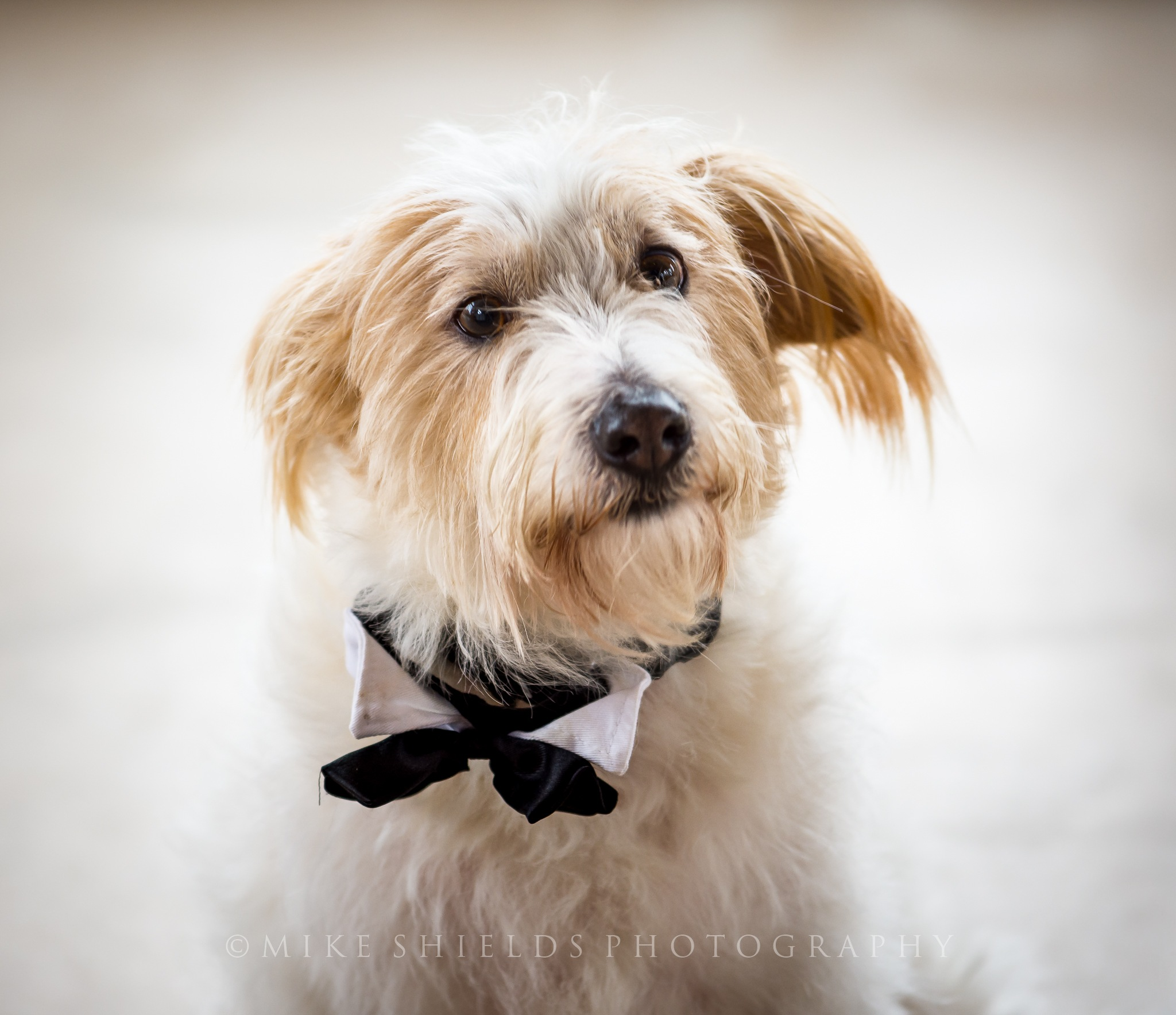 Canine Wedding Guest by MikeShieldsPhotography