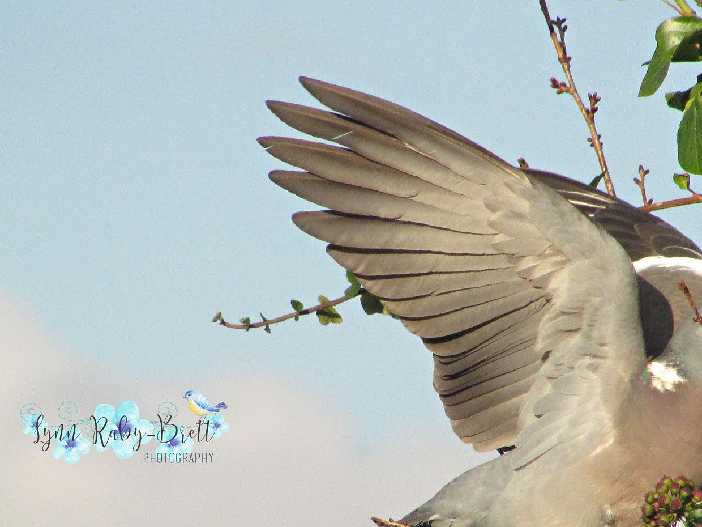 Angel Wings by Happy Snapper