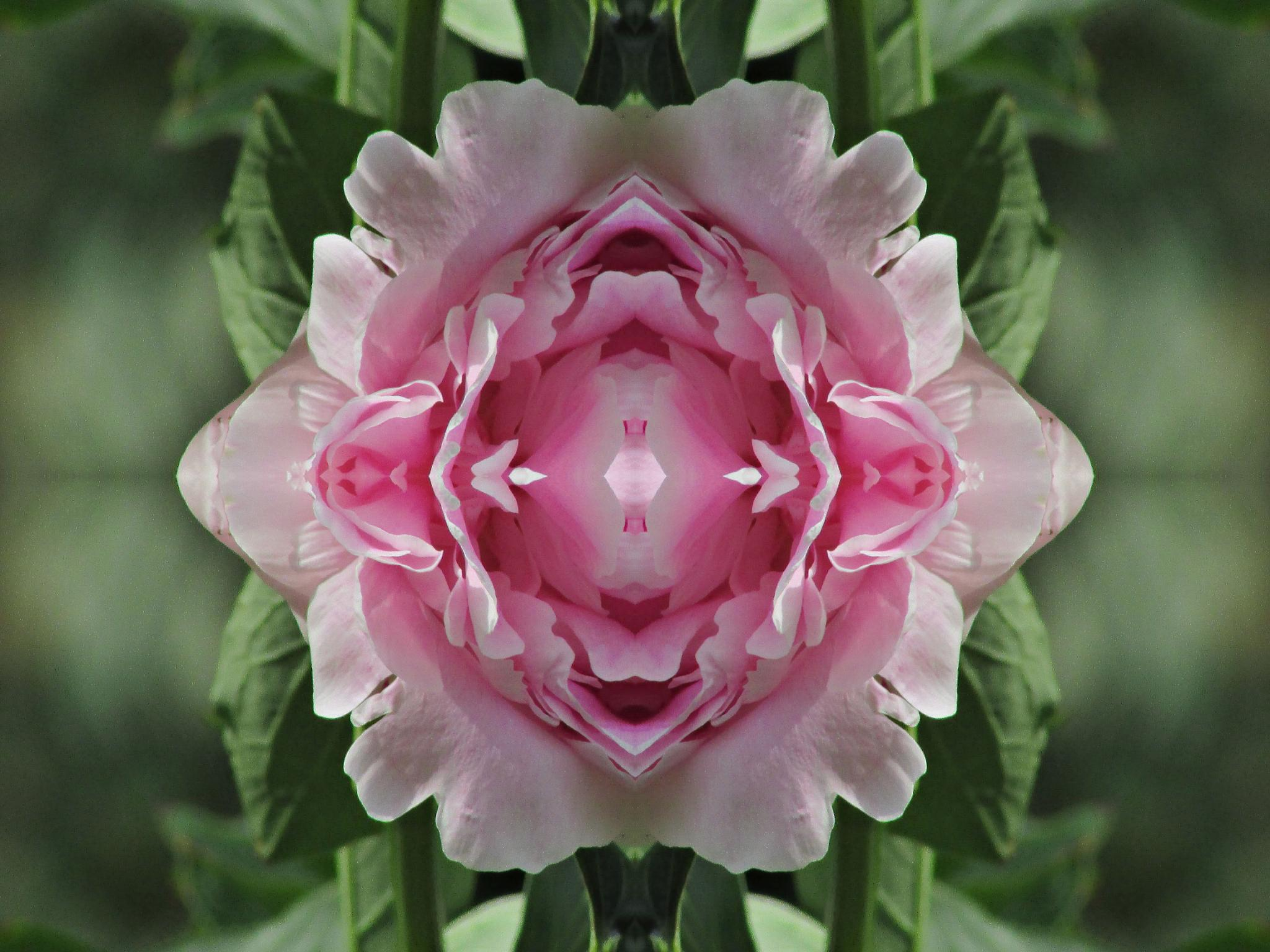 Manipulated Peonie by Happy Snapper