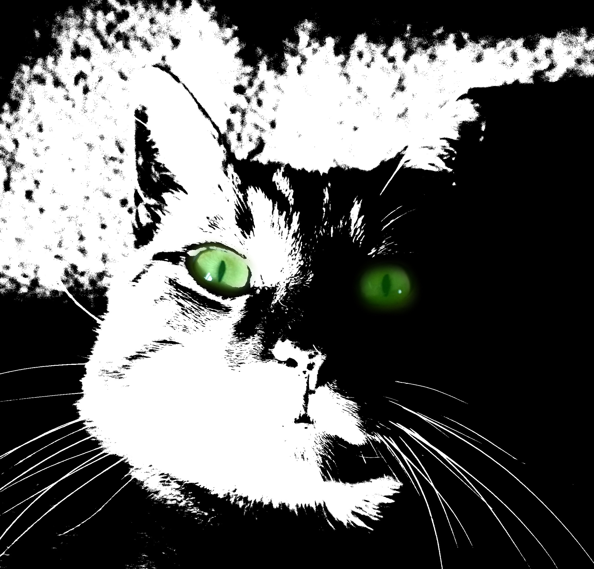 green eyed kitty by Terry Dunn