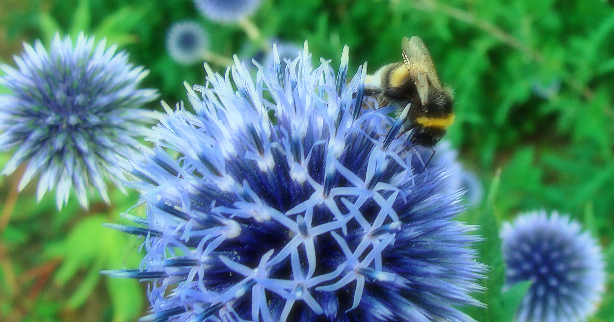 bee monday 2 by Terry Dunn