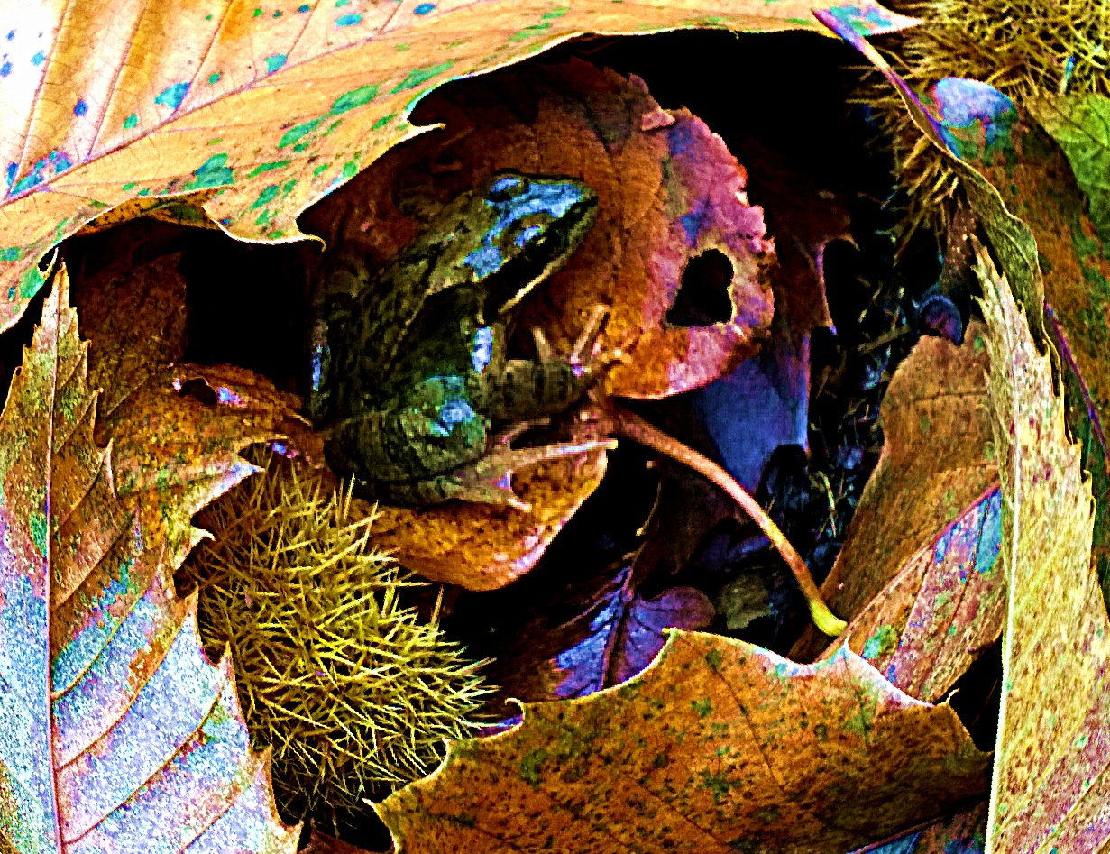 frog house by Terry Dunn