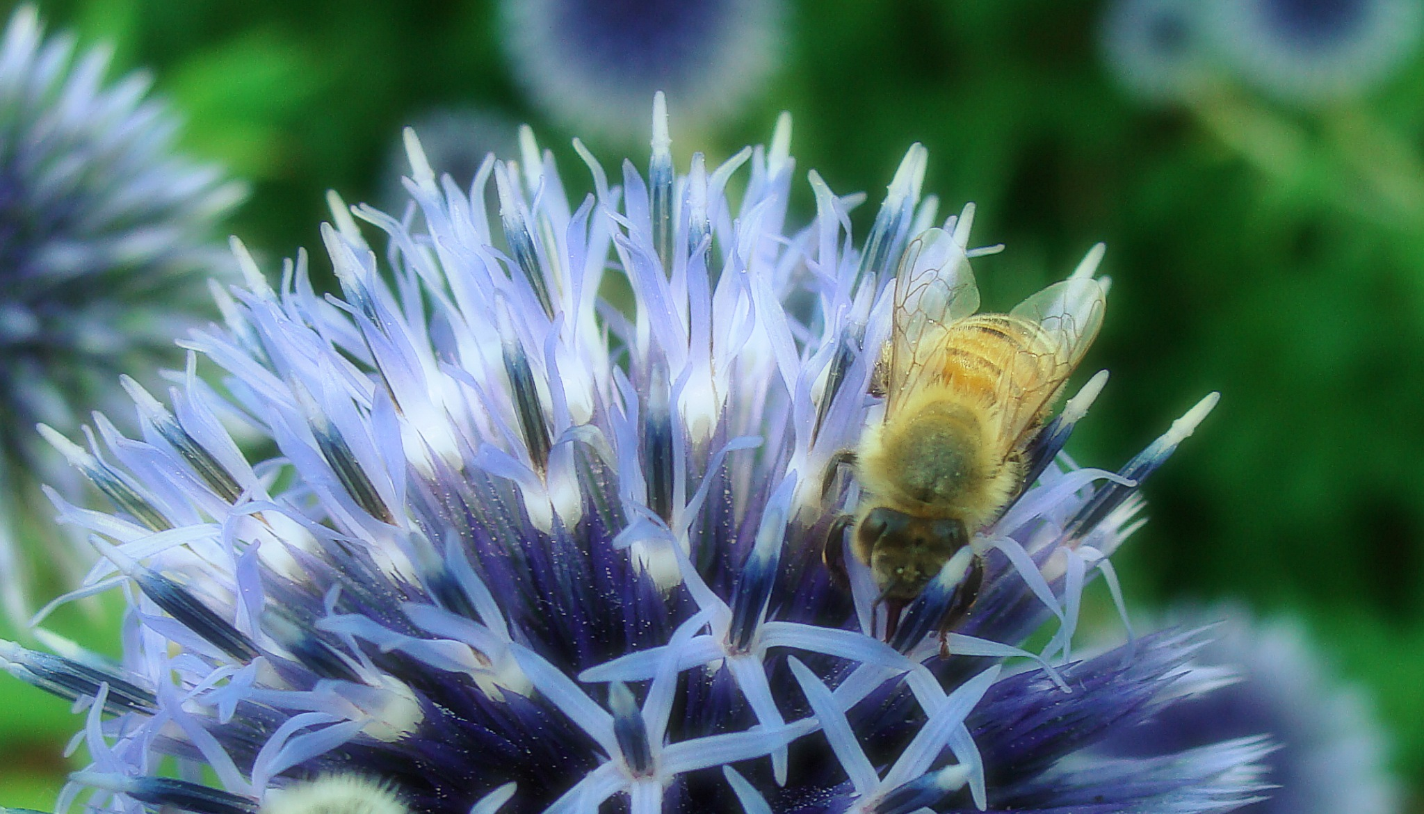 bee monday by Terry Dunn