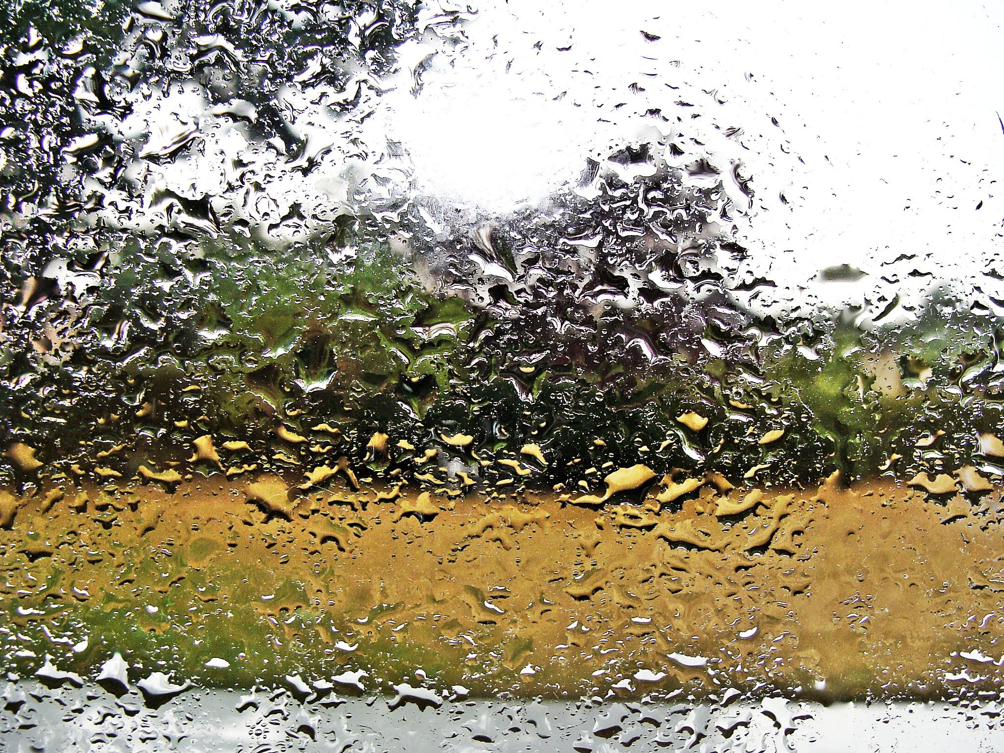 rain by Terry Dunn