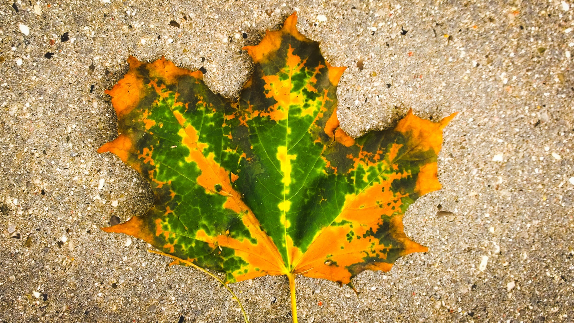 fall leaf by Terry Dunn