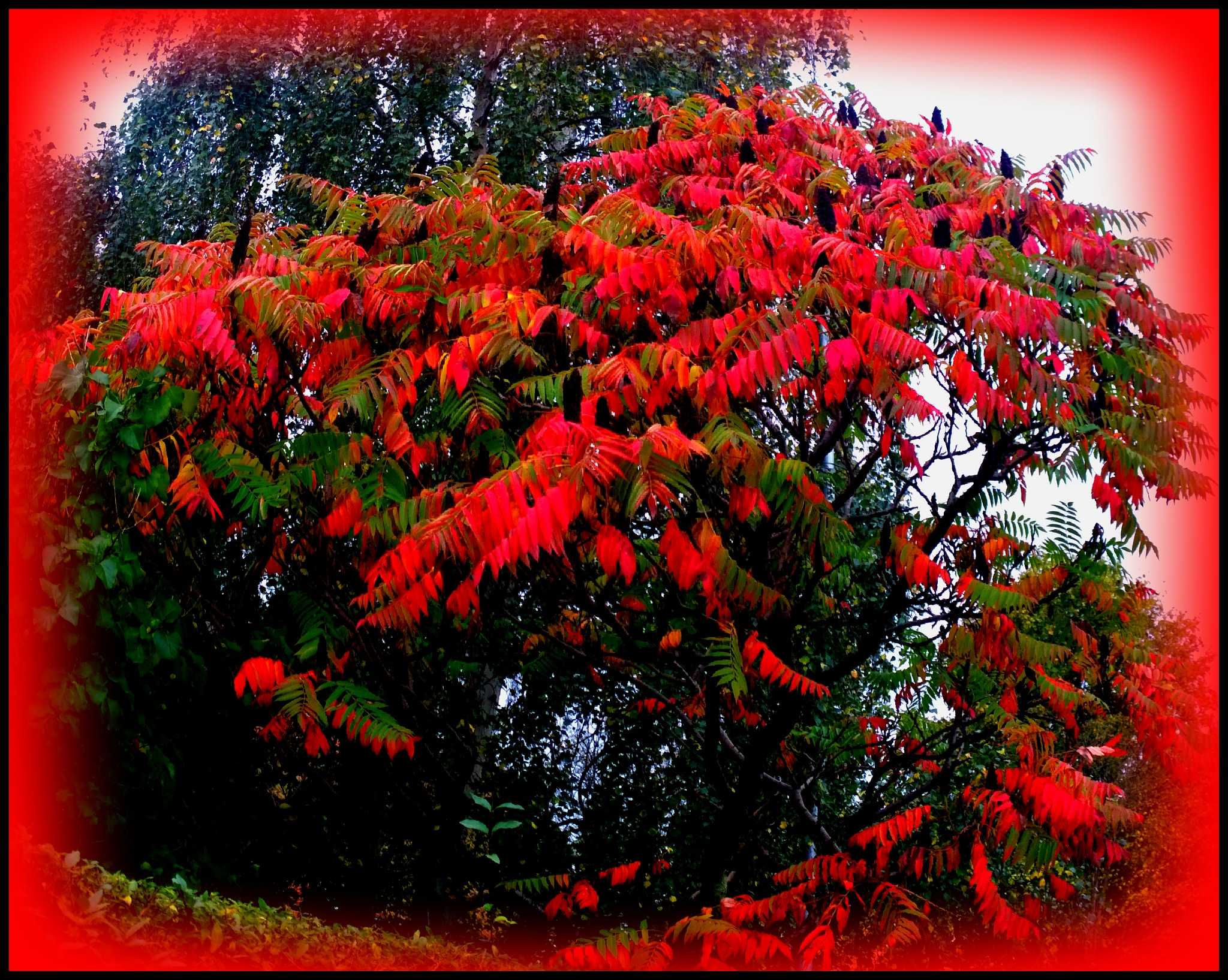 red tree by Terry Dunn