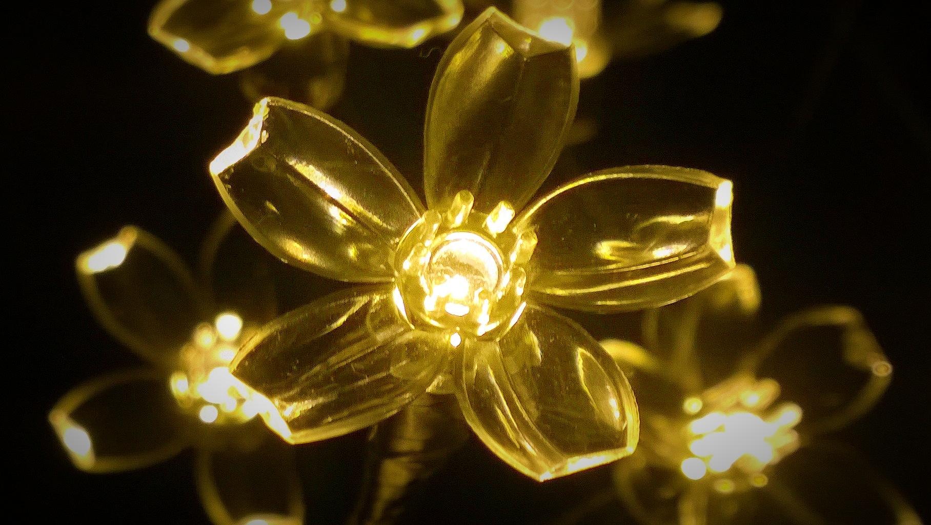 xmas light by Terry Dunn